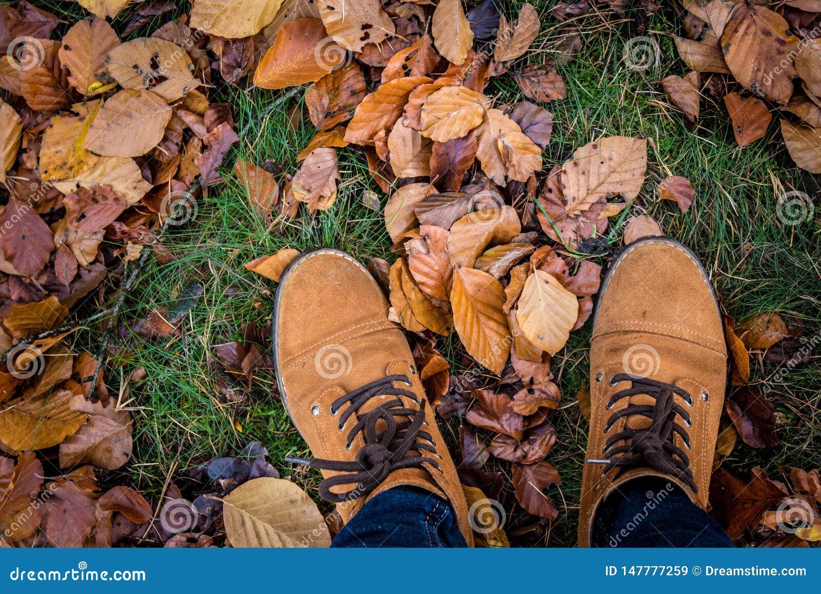 Весна, который нужно упасть ноги прогулки леса