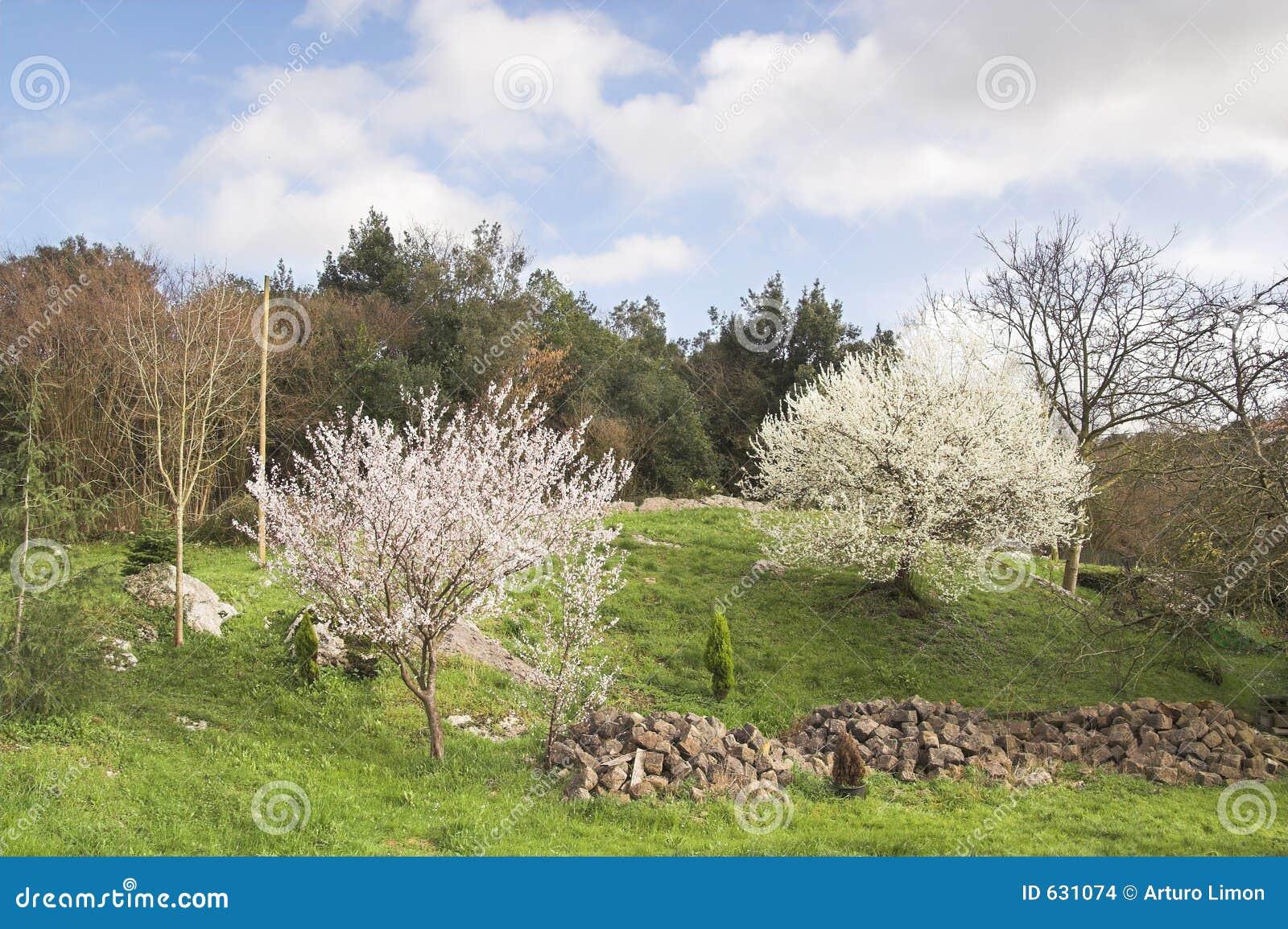Download весна ландшафта стоковое фото. изображение насчитывающей валы - 631074