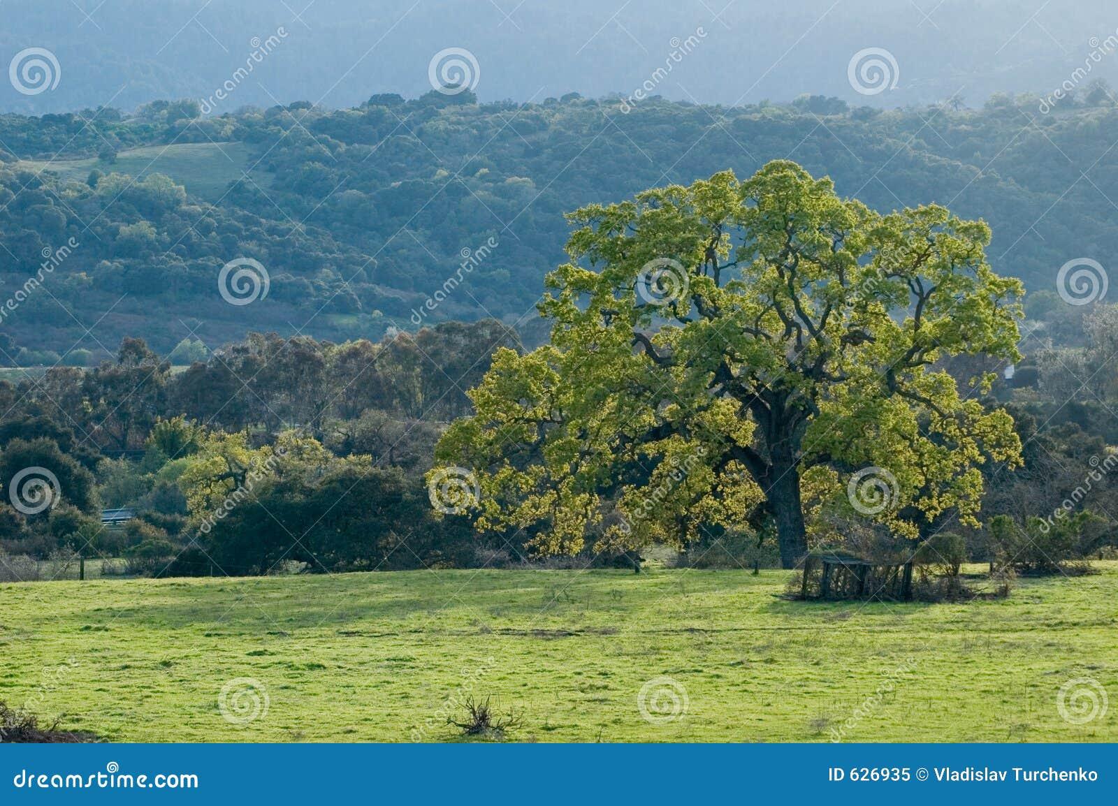 Download весна ландшафта California северная Стоковое Изображение - изображение насчитывающей hillside, холмисто: 626935