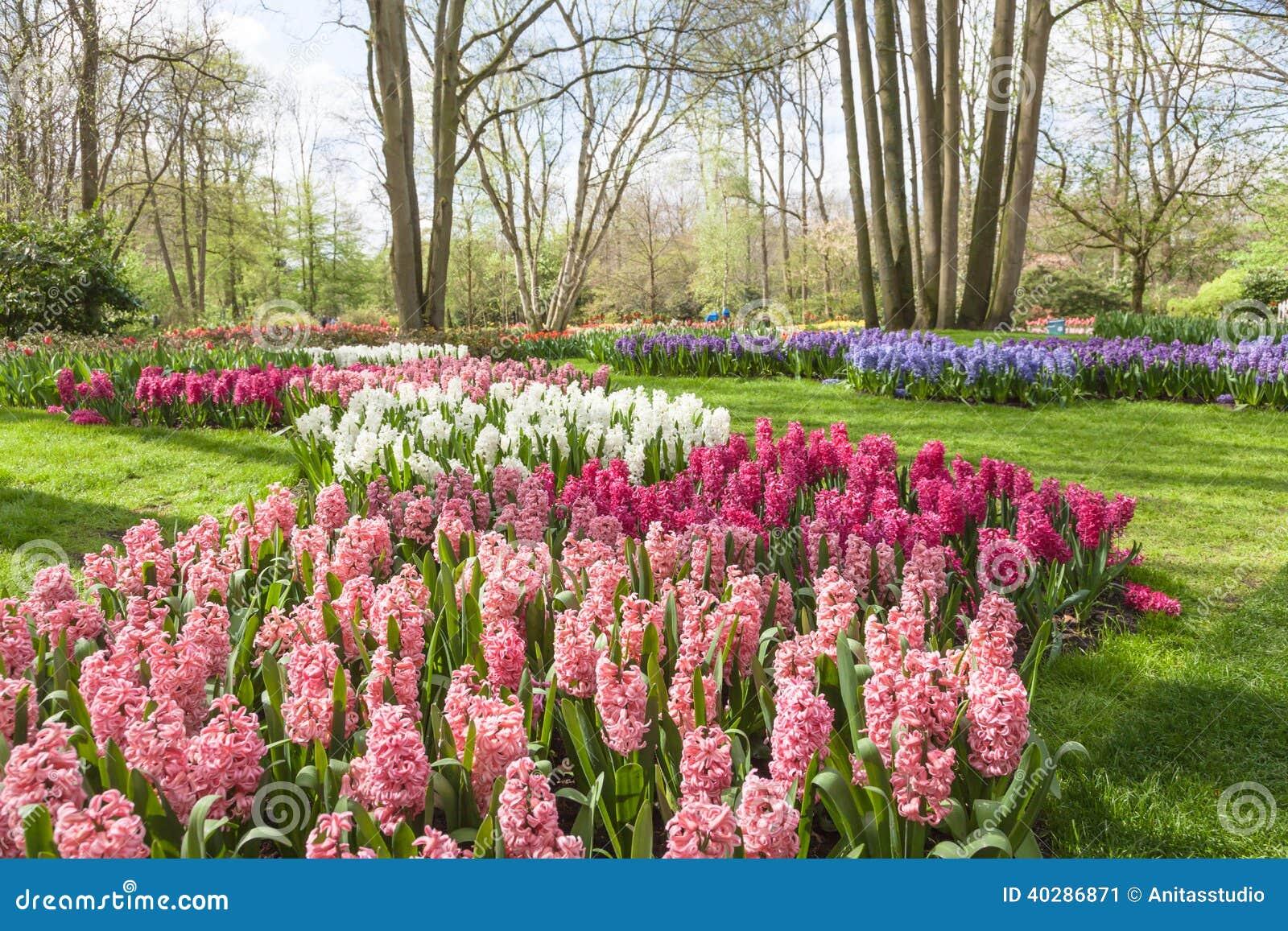 Весна цветет в голландском саде Keukenhof весны (Lisse, Нидерландах)
