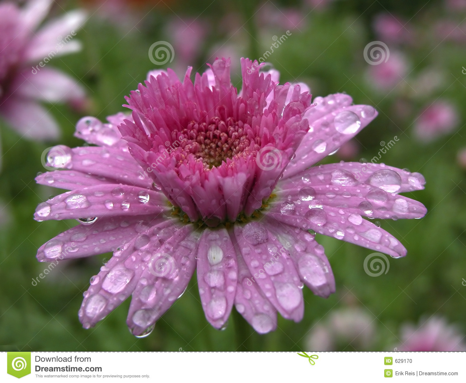 Download весна цветка стоковое фото. изображение насчитывающей промахов - 629170