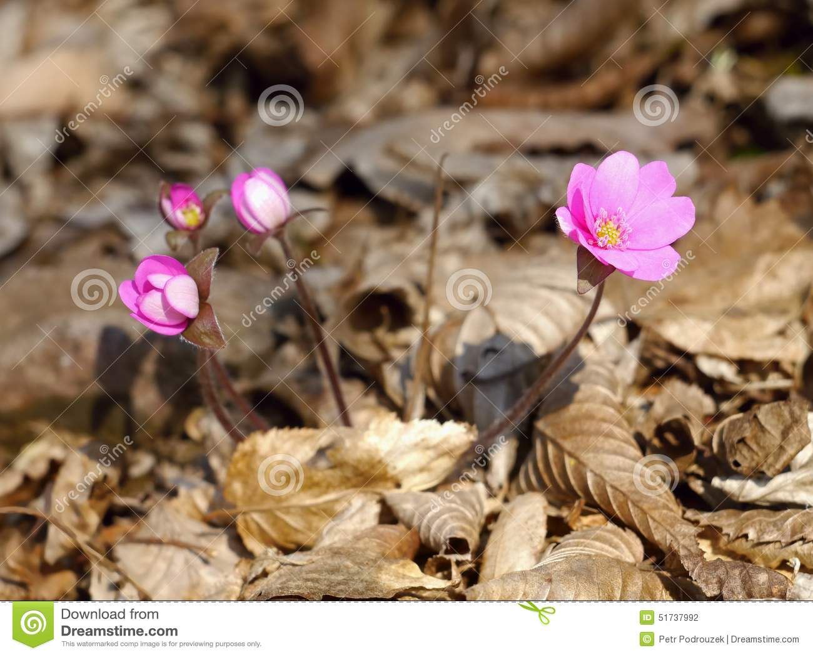 весна цветков розовая