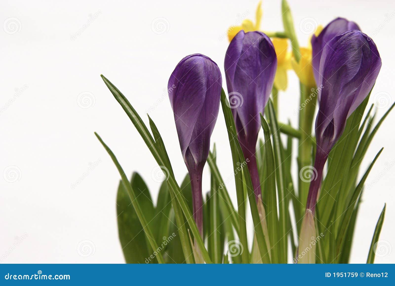 весна цветков
