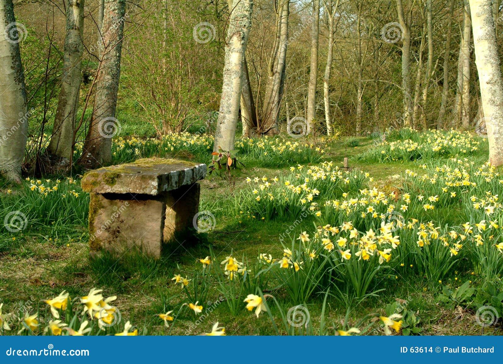 весна Шотландии отступления