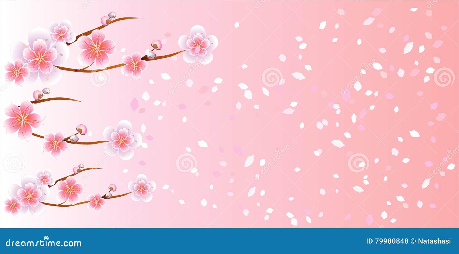 Ветви летать Сакуры и лепестков изолированный на свете - розовой предпосылке цветки Apple-вала Цветение вишни Вектор EPS 10, cmyk