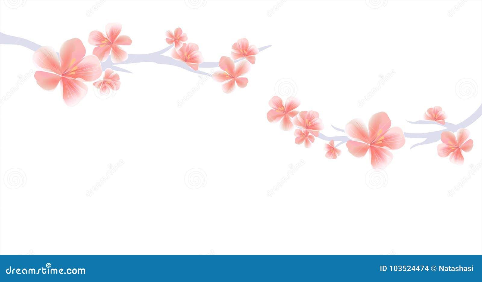 Ветви Сакуры с розовыми цветками на белой предпосылке Цветки Sakura Цветение вишни Вектор EPS 10, cmyk