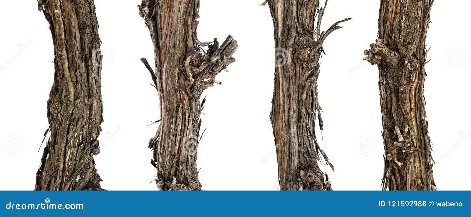 Ветви собрания сухие лозы