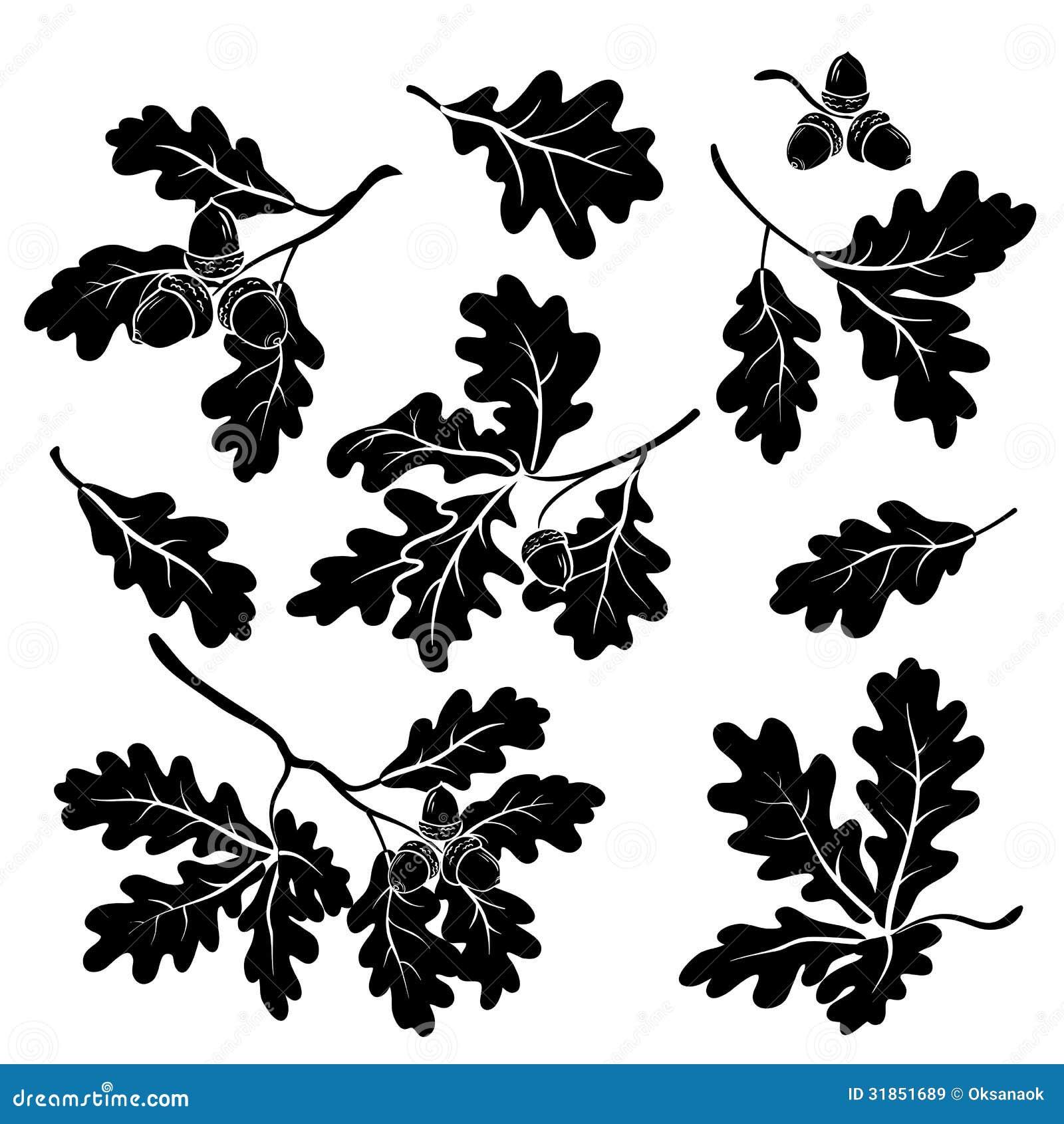 Ветви дуба с жолудями, силуэтами