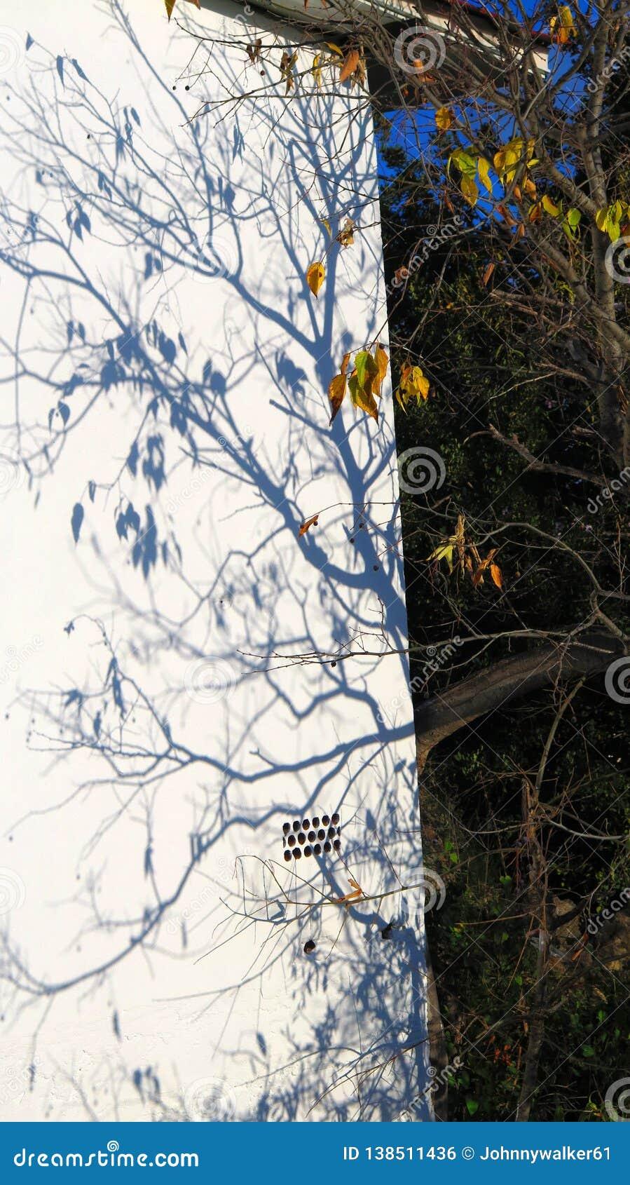 Ветви удлиняя тень на белую стену в андалузской солнечности зимы