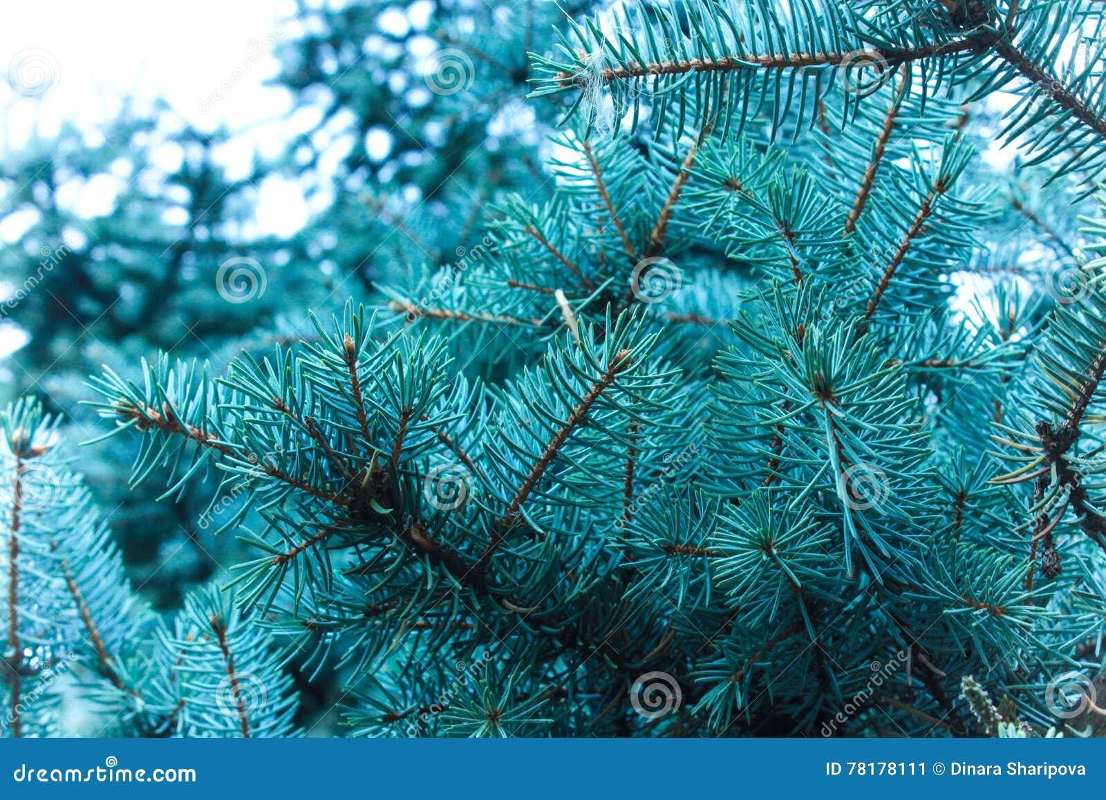 Цвет запах дерева