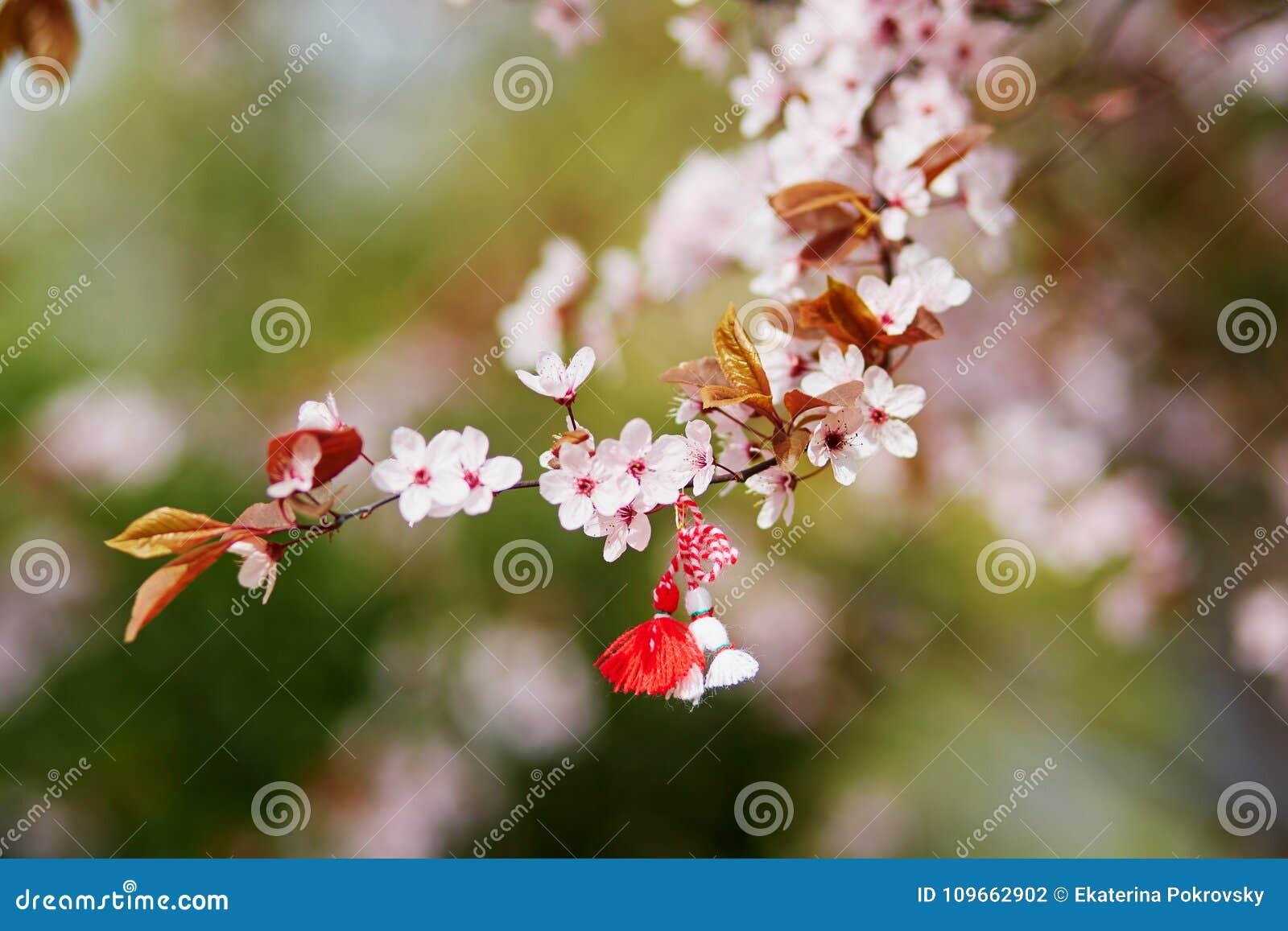 Ветвь вишневого дерева с martisor, традиционным символом первого весеннего дня