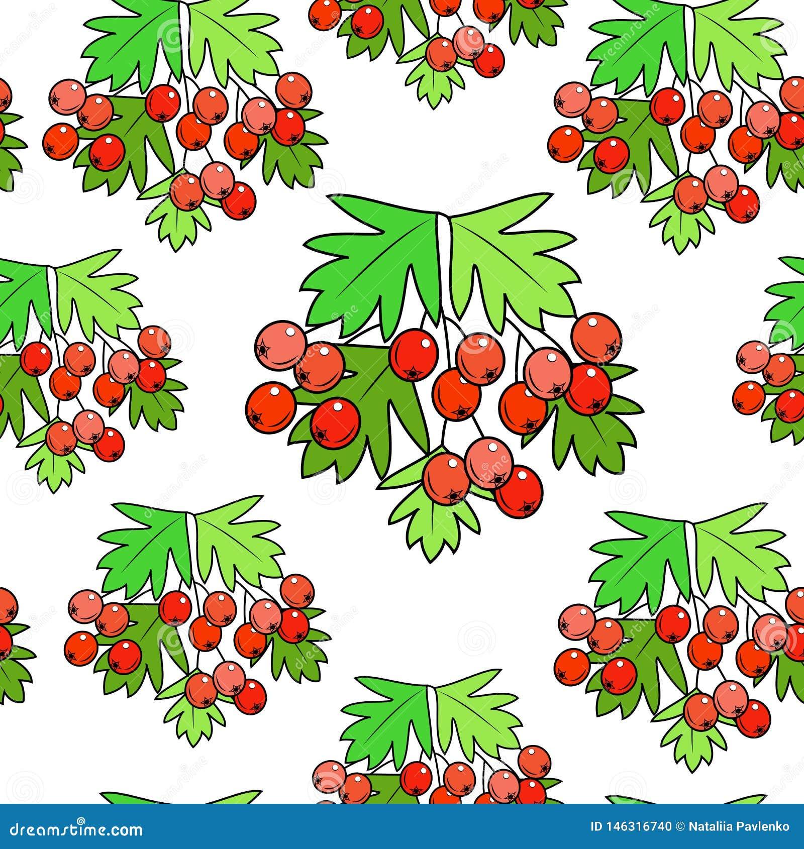 Ветвь красивой ягоды боярышника, лекарственного растения Полезный к здоровью Молчаливая картина r