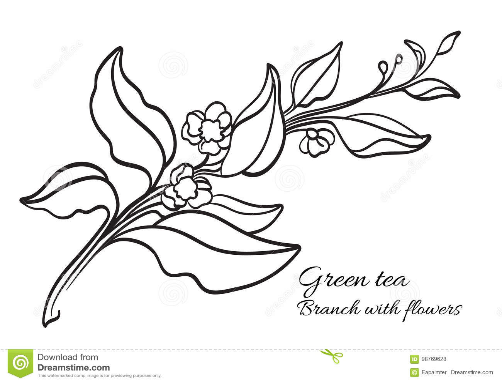 Ветвь куста чая с листьями и цветками реалистическо органический продукт вектор