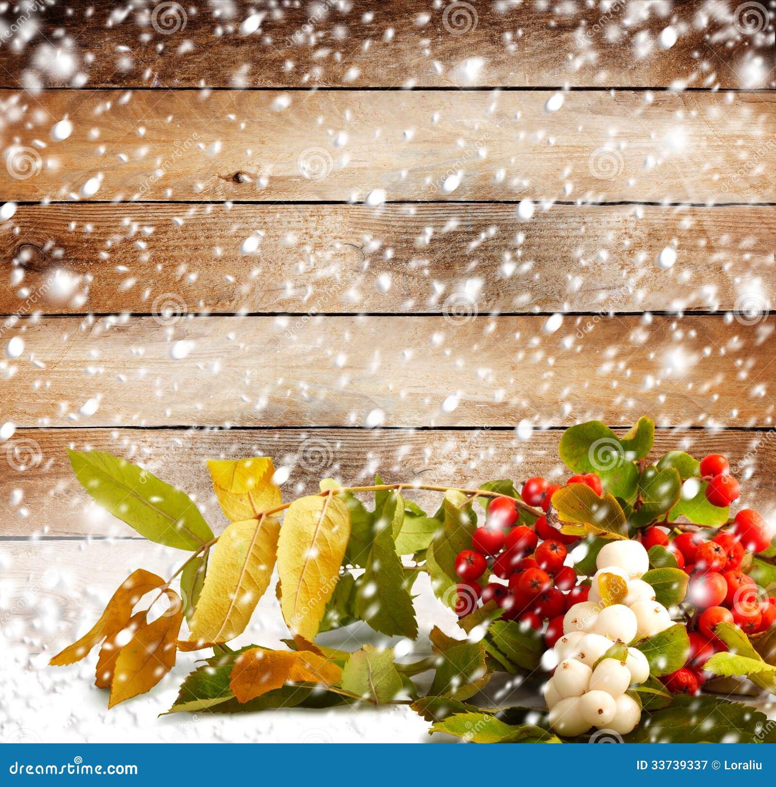 Ветвь рябины на покрытой снежк деревянной предпосылке