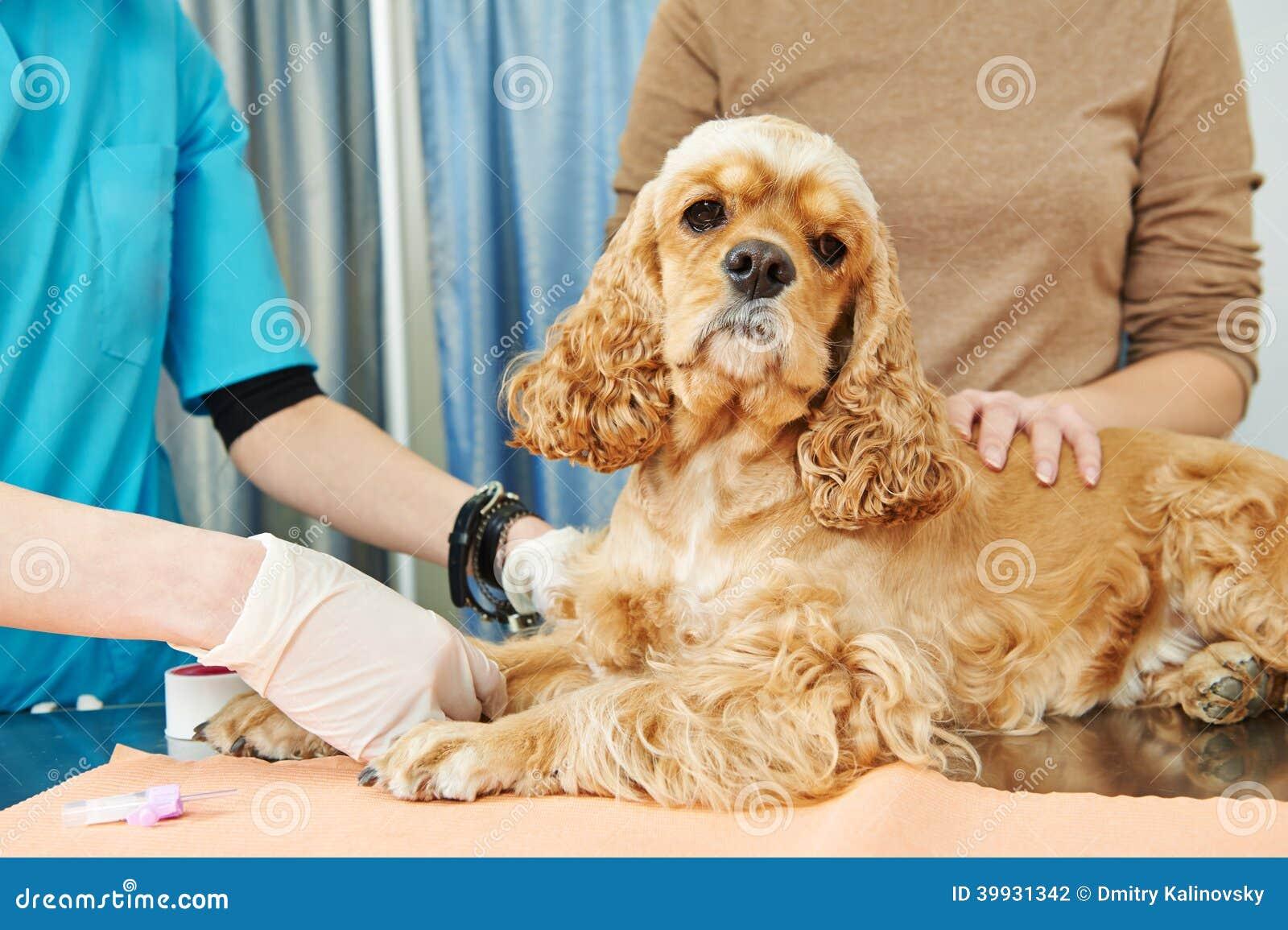 Ветеринарное рассмотрение анализа крови собаки