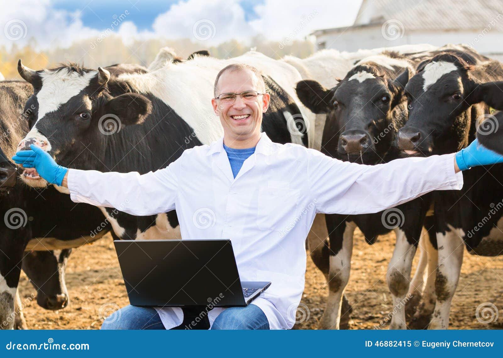 Ветеринар на скотинах фермы