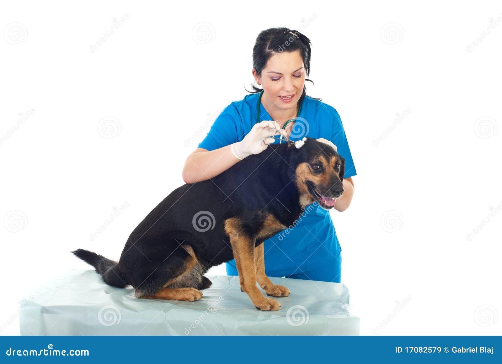 ветеринар уха собаки чистки