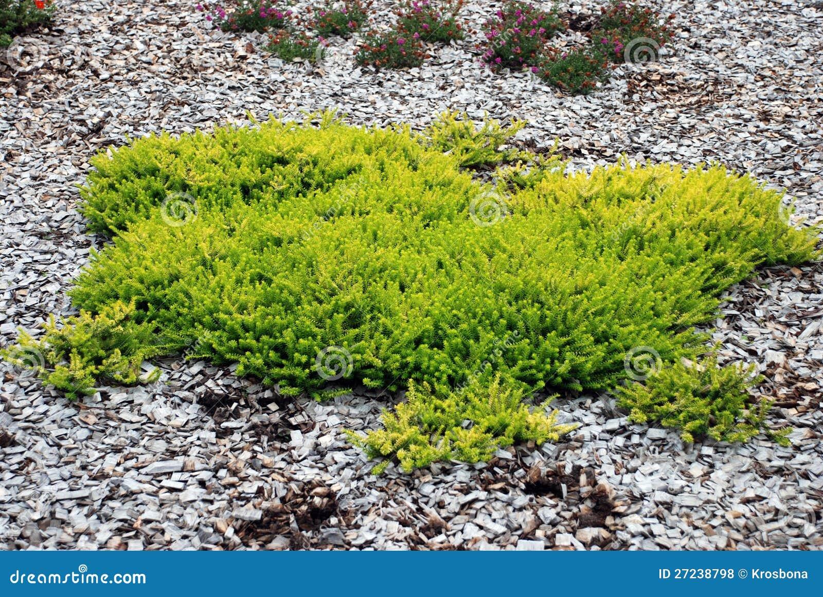 Вечнозеленый вал