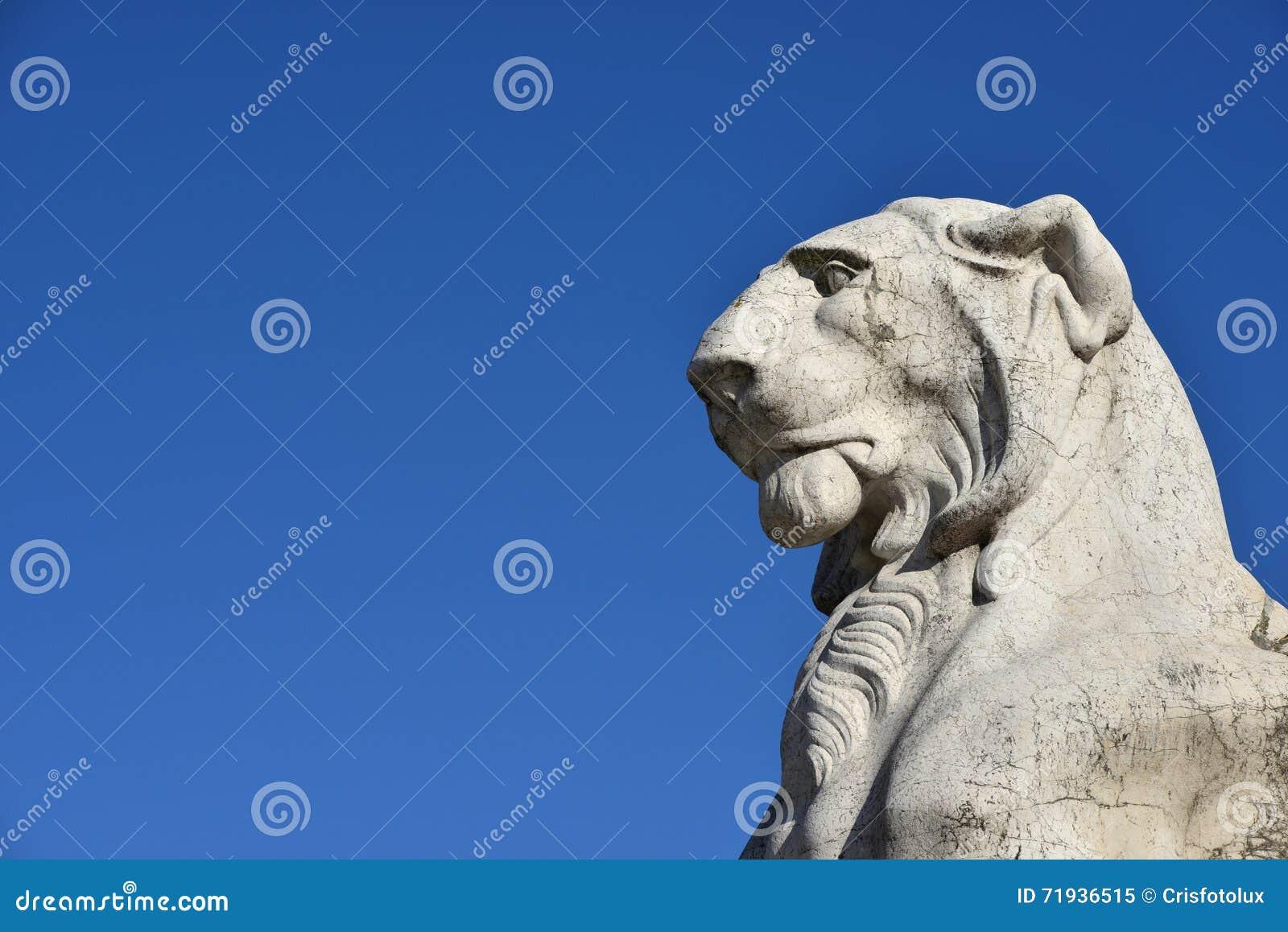 Величественный лев (с космосом экземпляра)