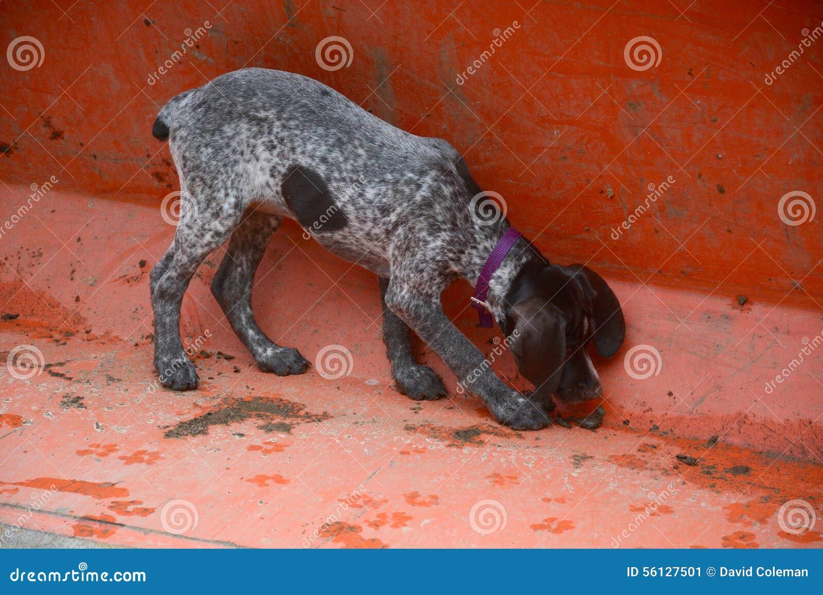 Ведро обнюхивать щенка