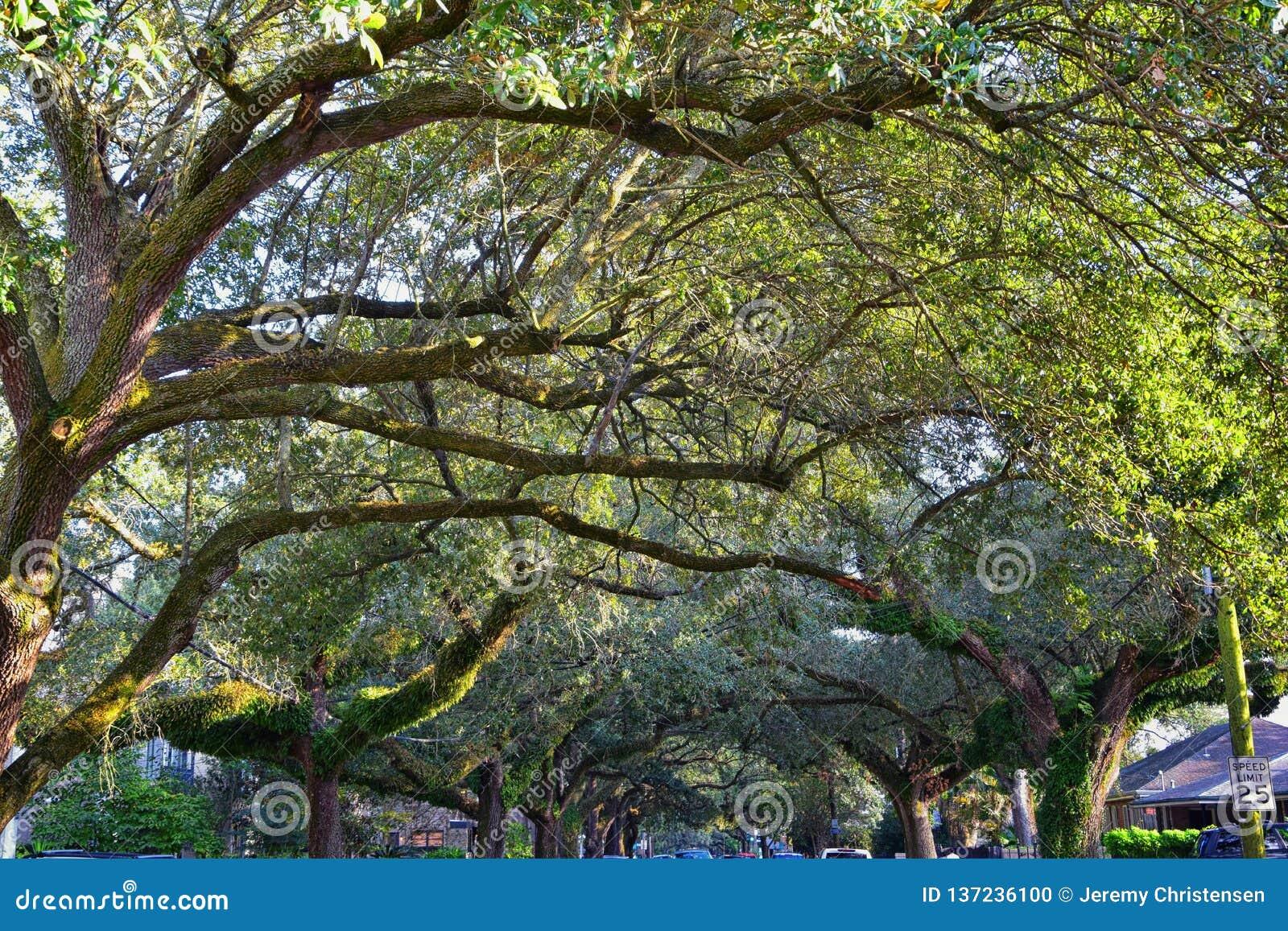 Взгляды деревьев и уникальных аспектов природы окружая Новый Орлеан, включая зеркальные пруды в кладбищах и районе сада