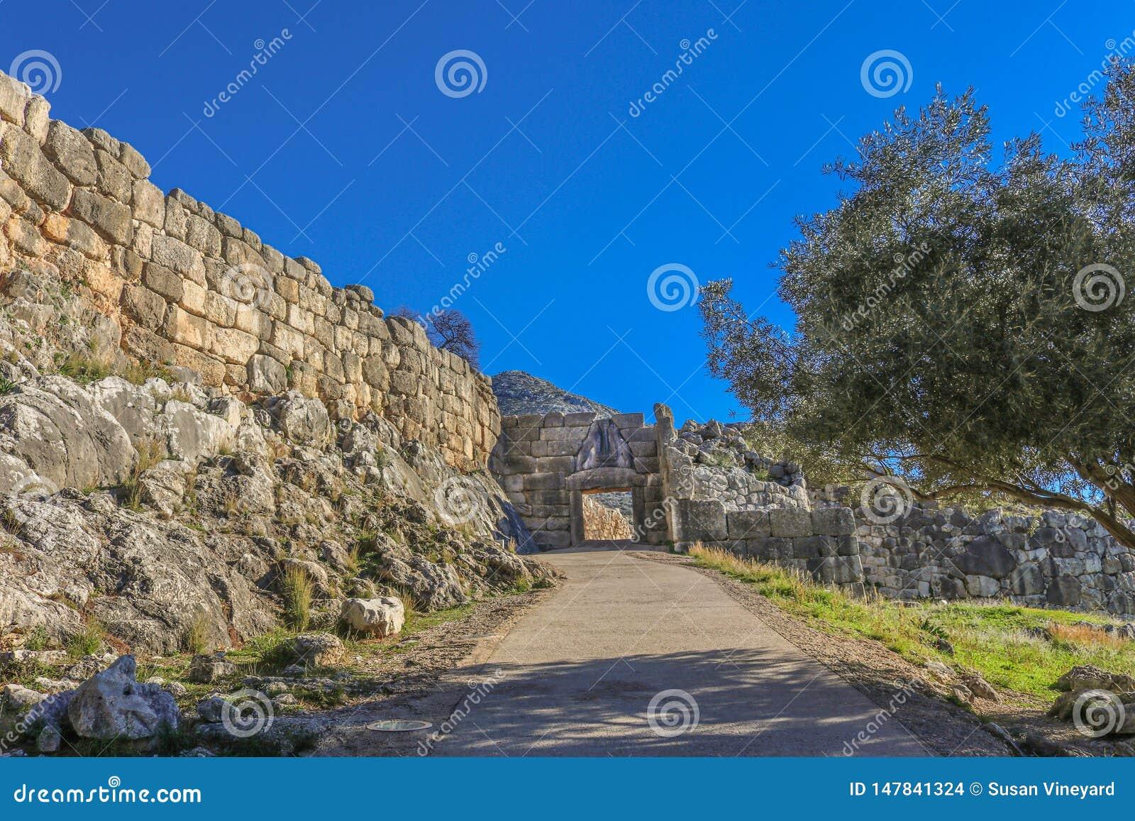 Взгляд ворот львов на старом Mycenae Греции от вниз холма показывая тротуар - затеняемый оливковым деревом - водя до конца