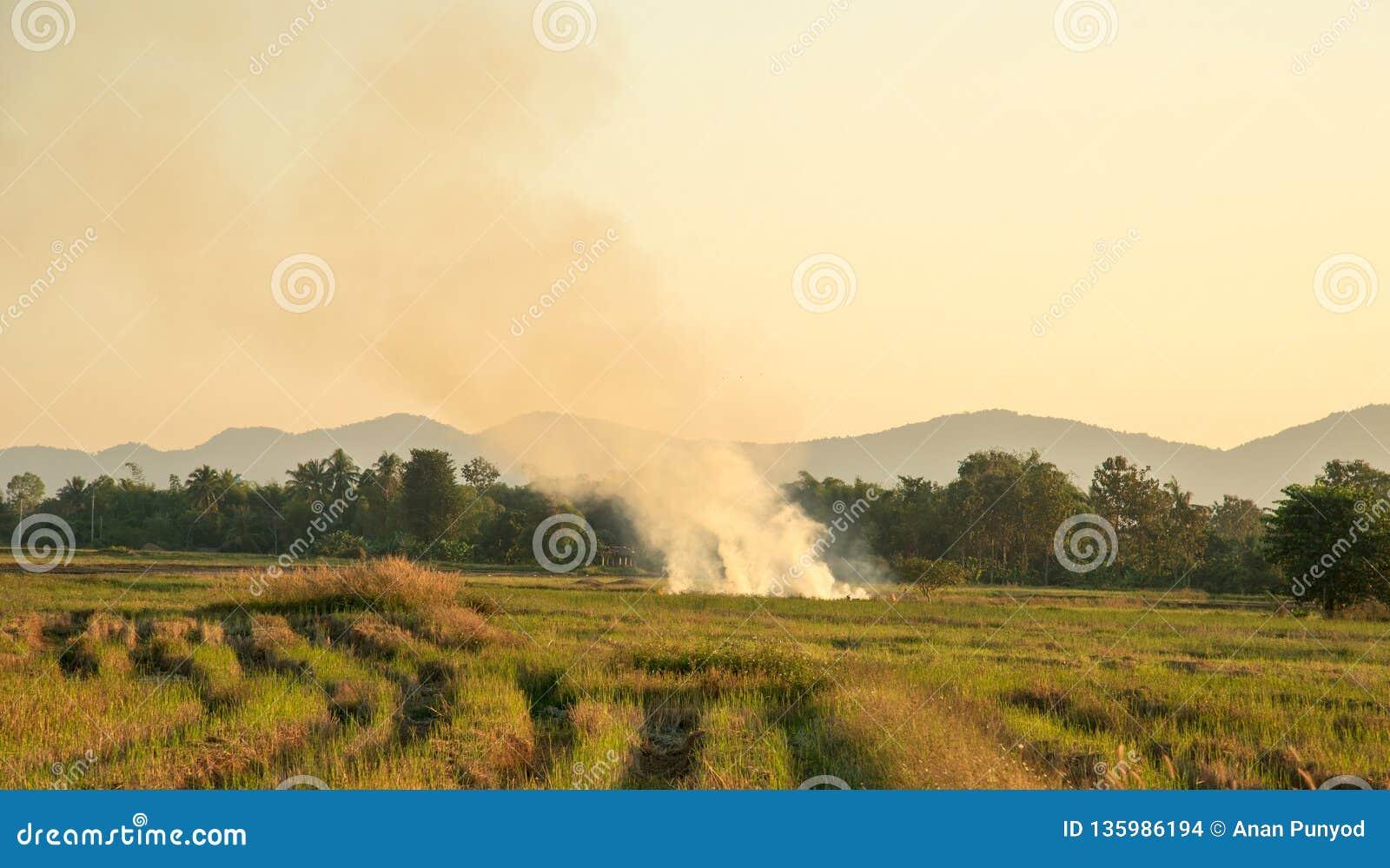 Взгляд горения после обрабатывать землю в полях риса