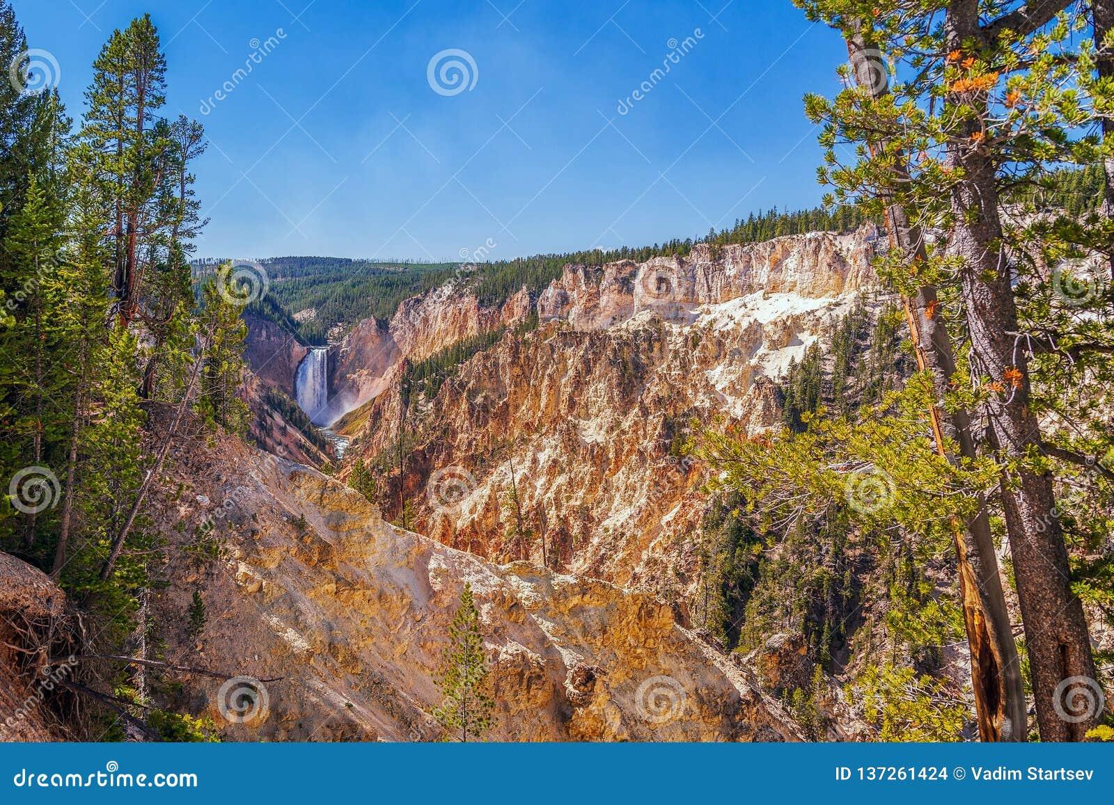 Взгляд гранд-каньона Йеллоустон от следа пункта художника Национальный парк Йеллоустона Вайоминг США