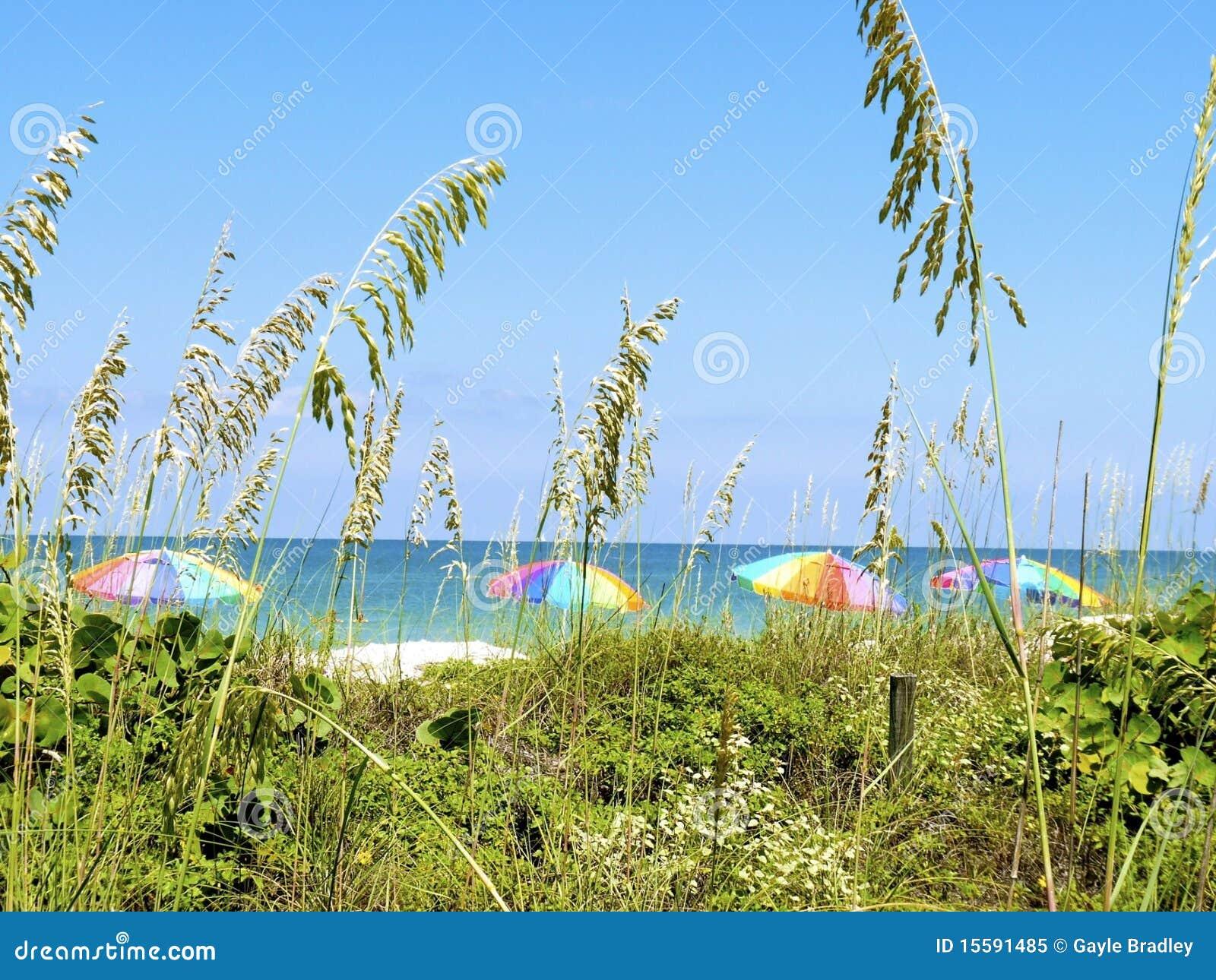 взгляд зонтика st pete пляжа