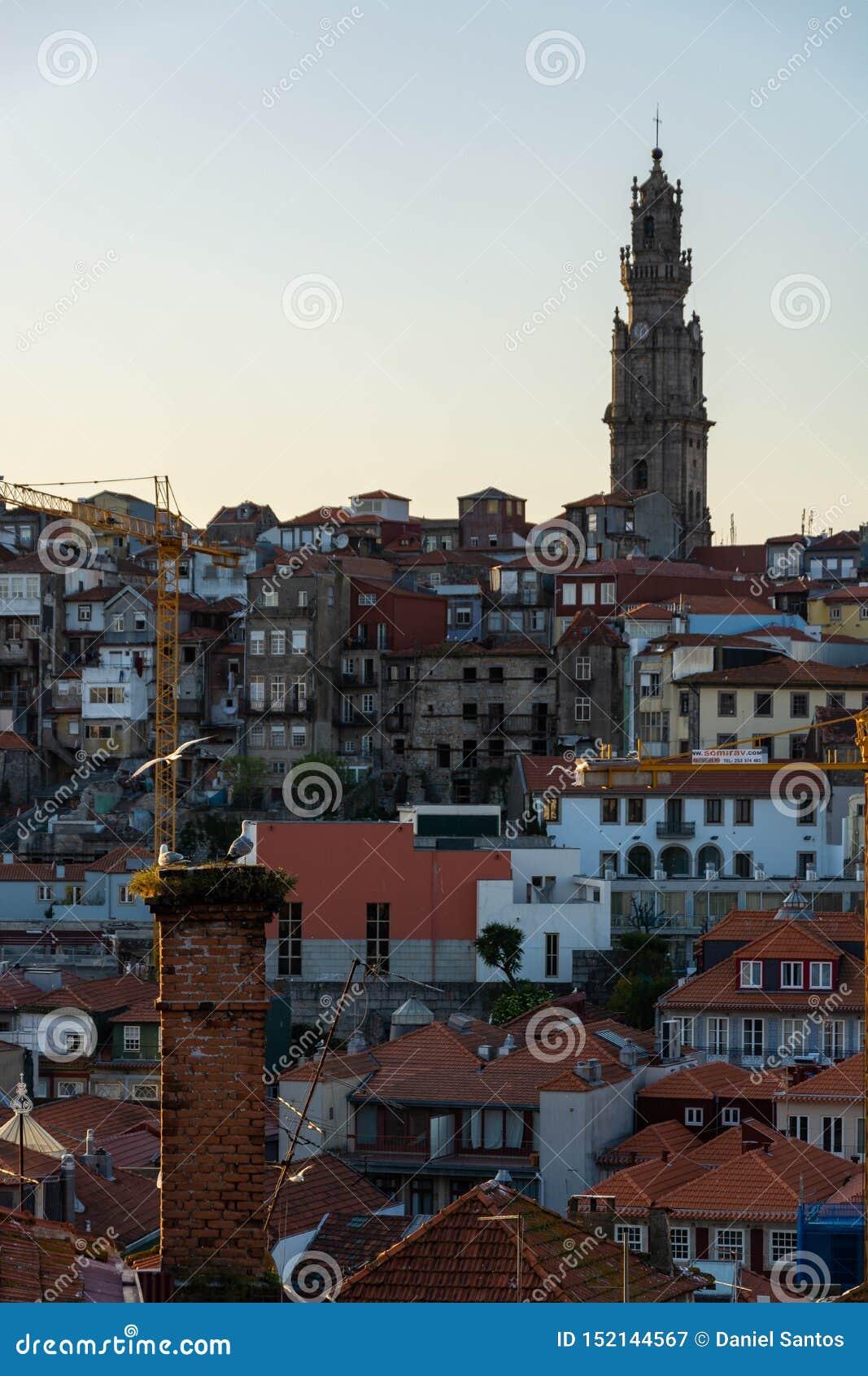 Взгляд к городу башни Порту и Clerigos Чайки на переднем плане