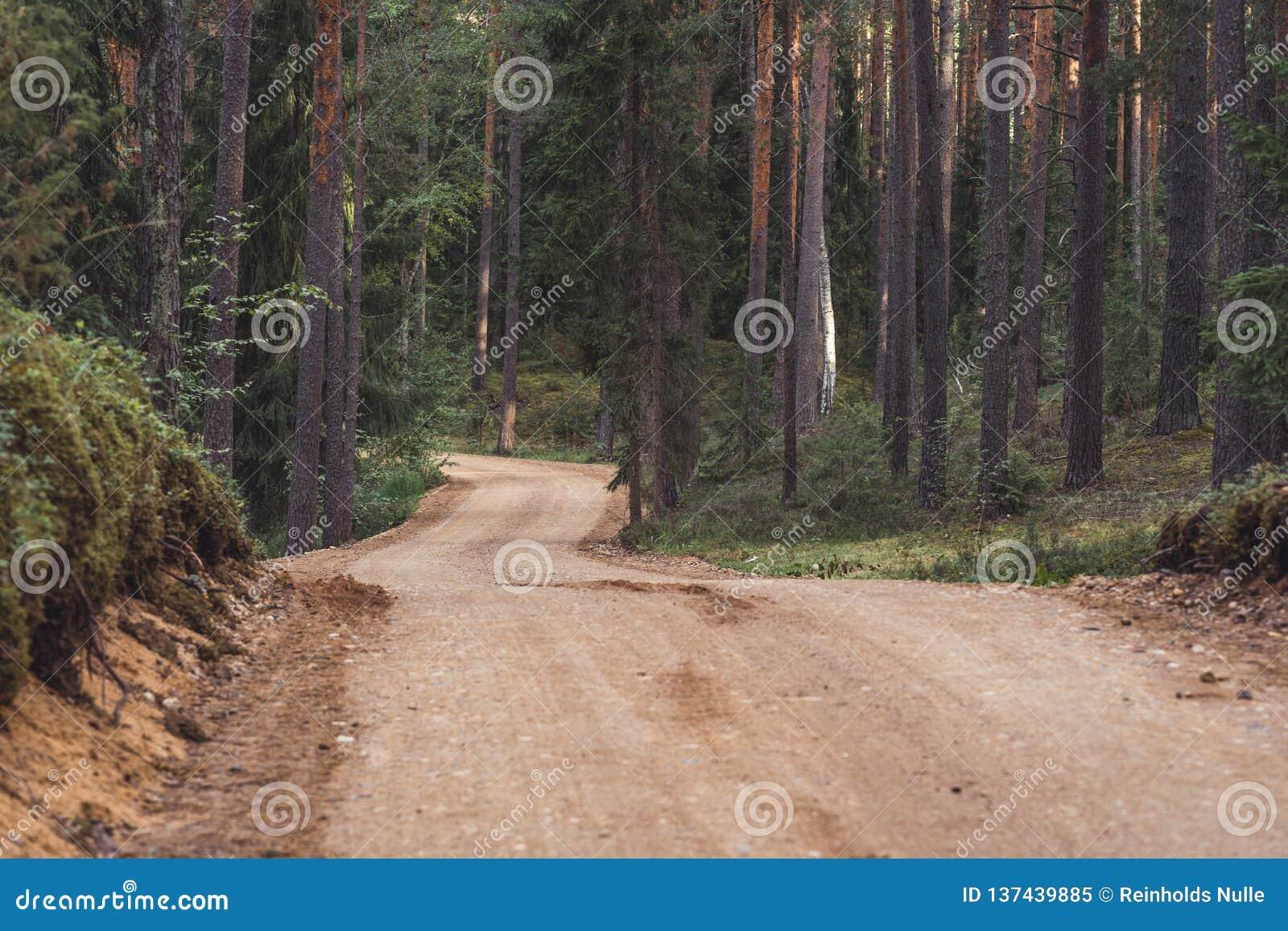 Взгляд пути дороги леса туристского, возглавлять более глубокий в древесинах на солнечный летний день, отчасти неясное изображени