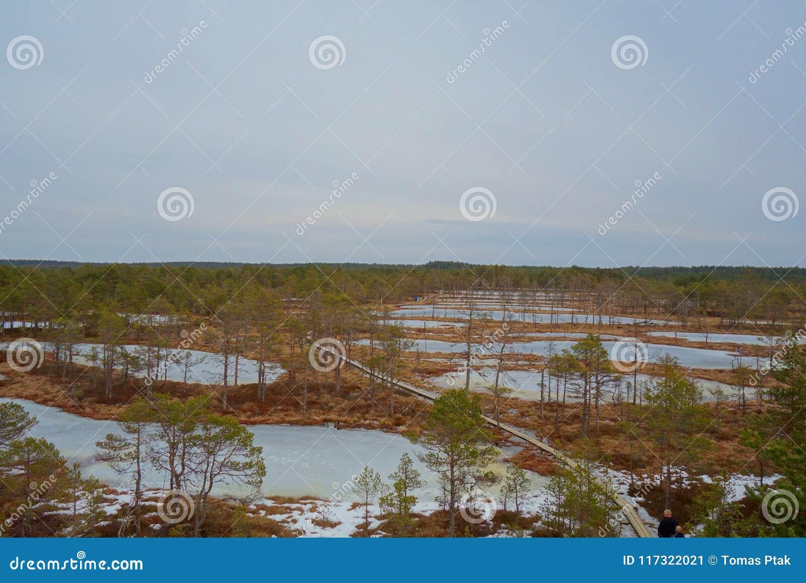 Взгляд сверху болота в Эстонии Поднятые озера трясины в предыдущих веснах viru тропки природы трясины Променад трясины популярное