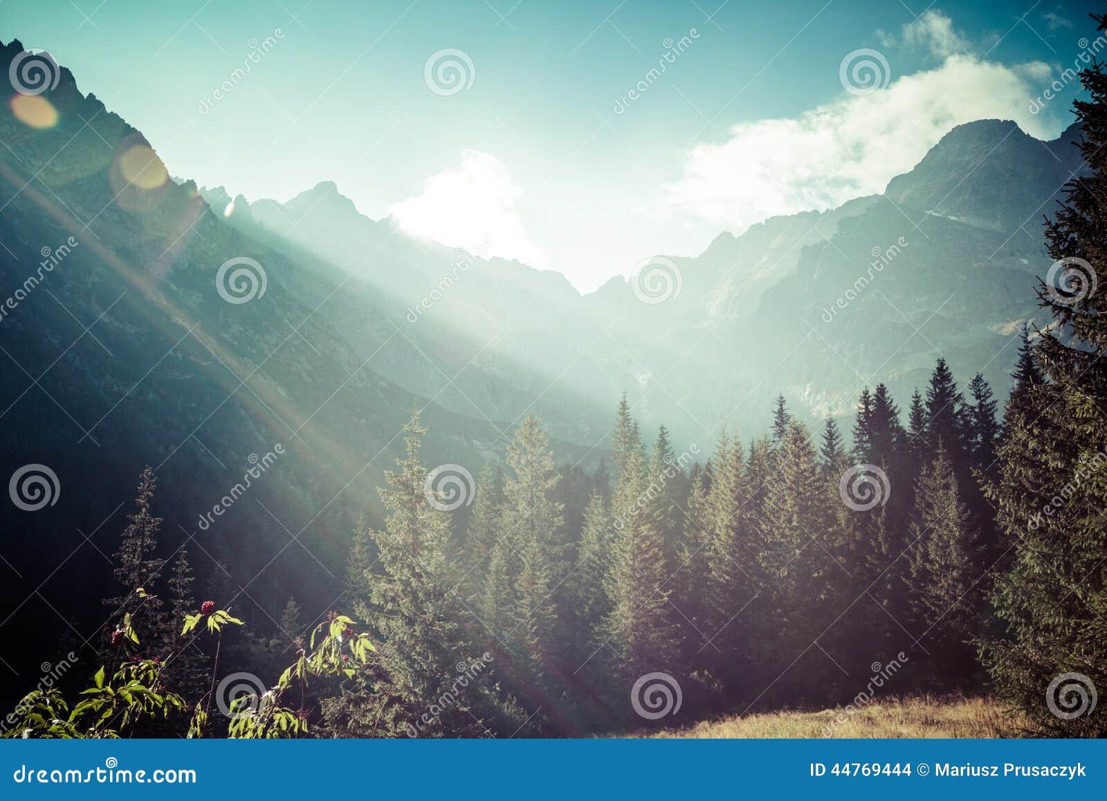 Взгляд гор Tatra от тропы Польша европа