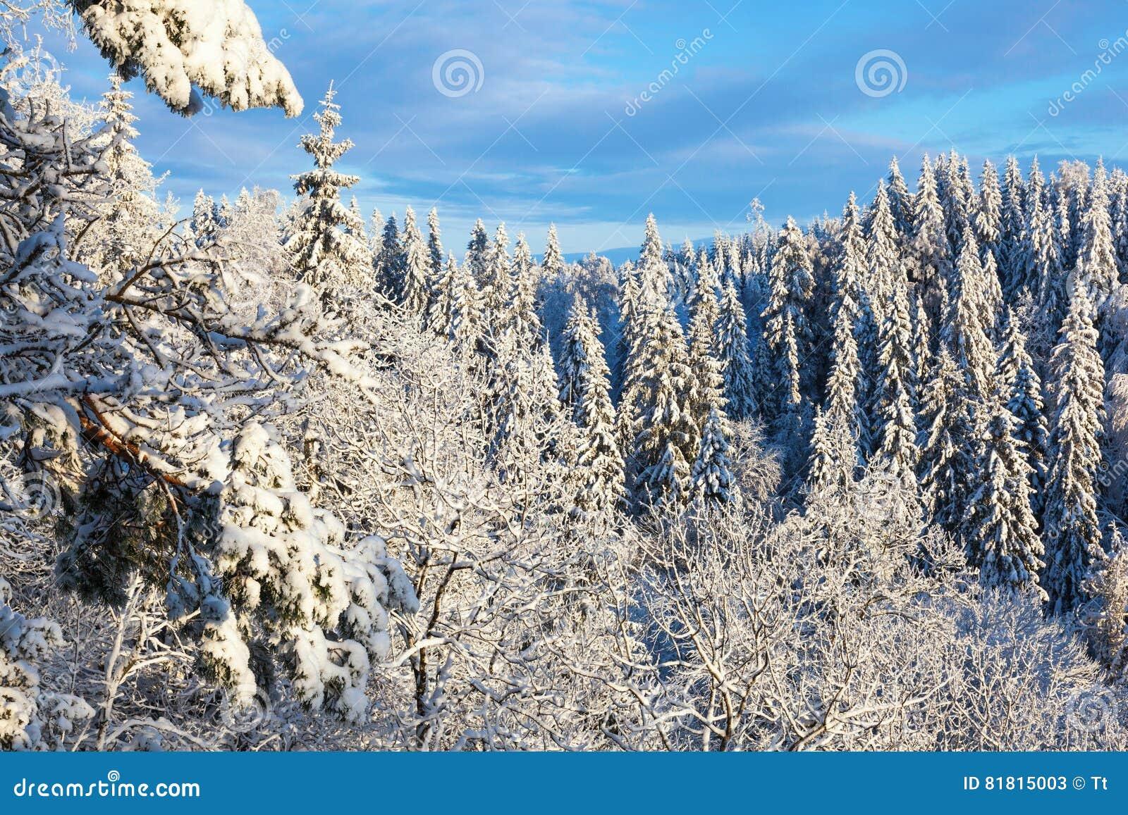 Взгляд леса зимы