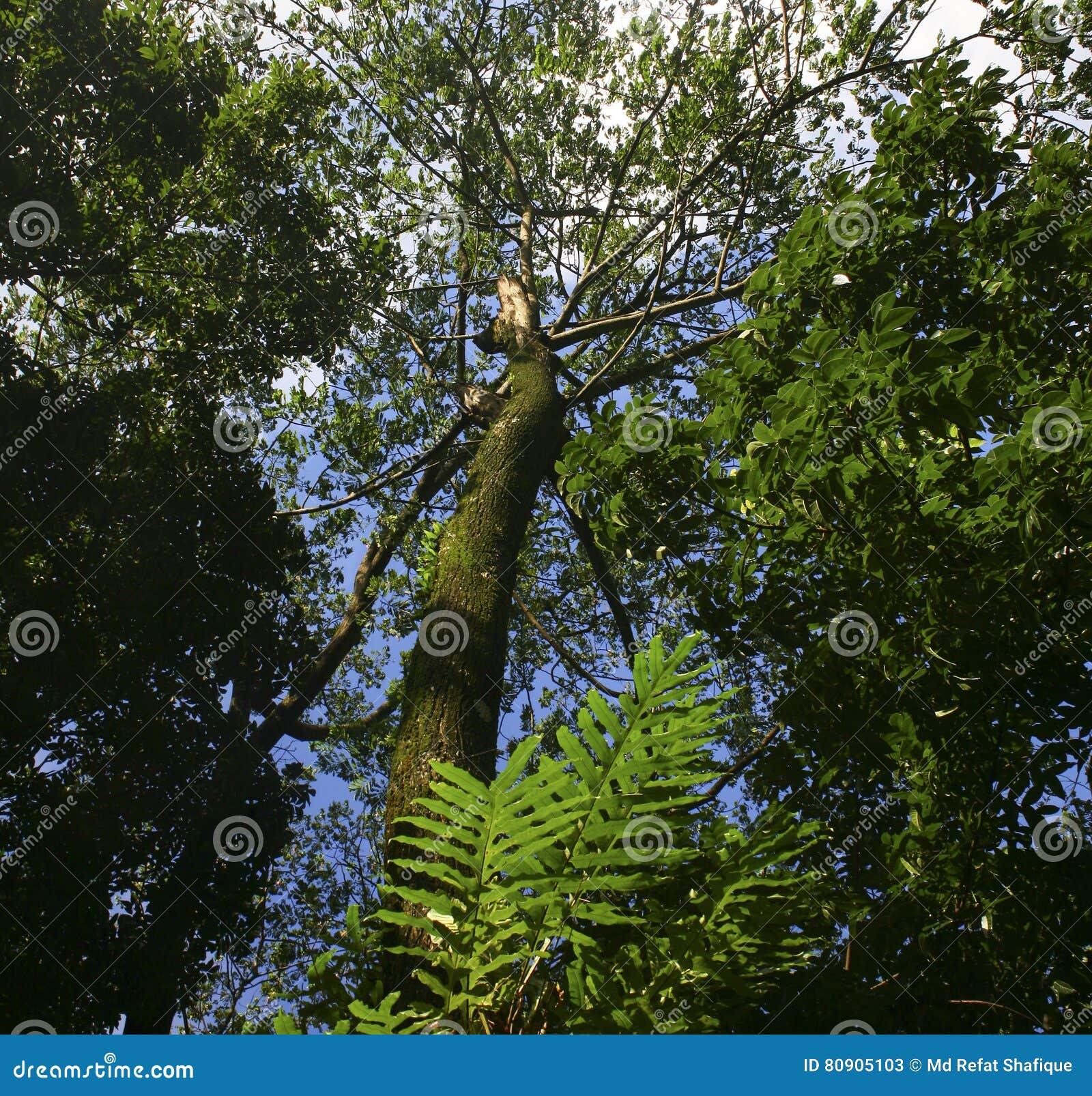 Взгляд низкого угла деревьев