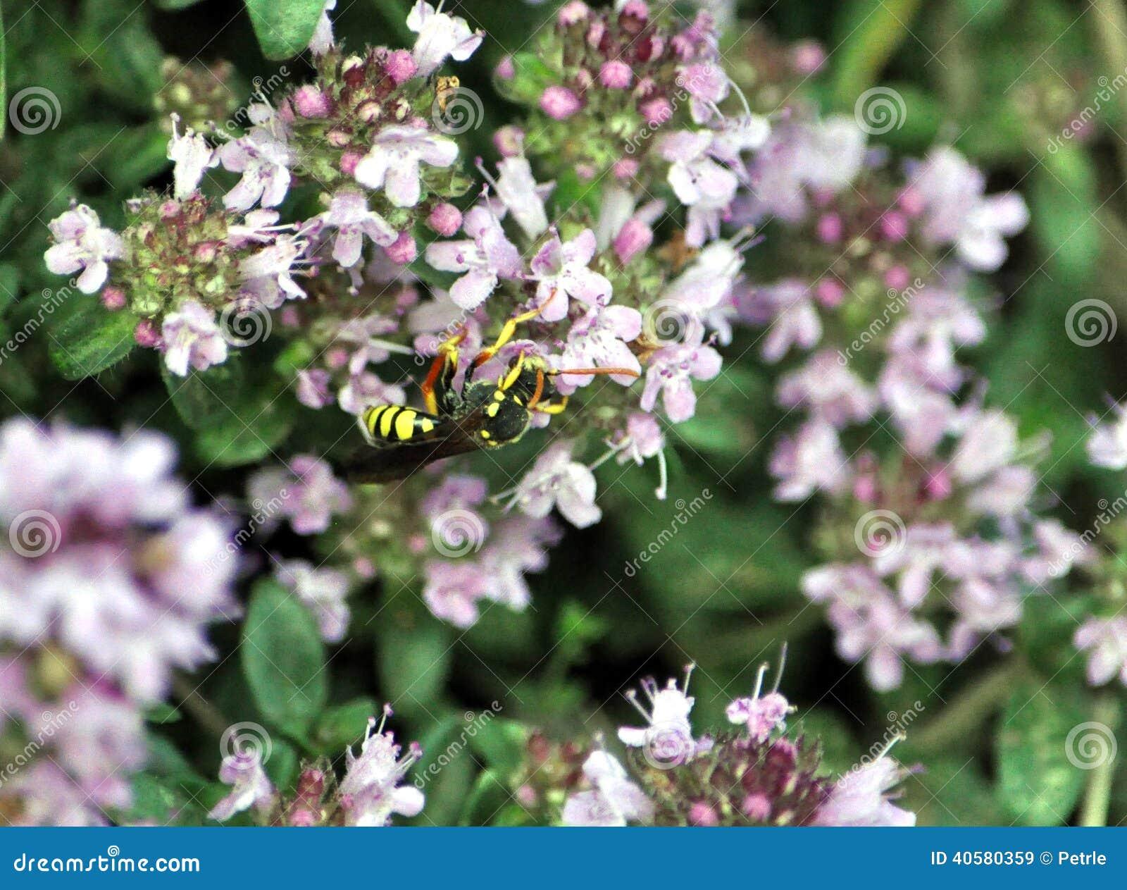 Взгляд оси на цветке