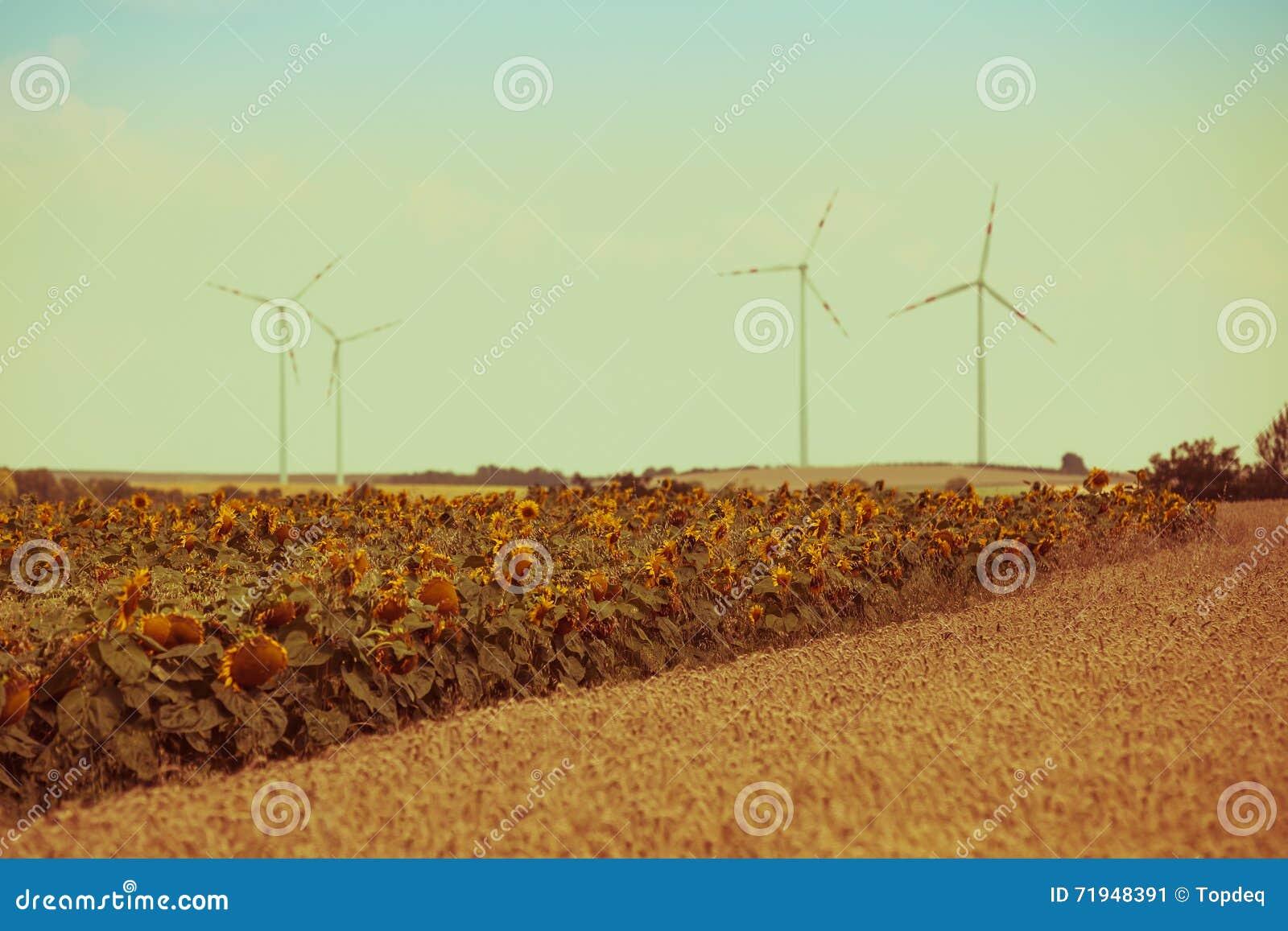 Взгляд полей хлопьев и солнцецветов