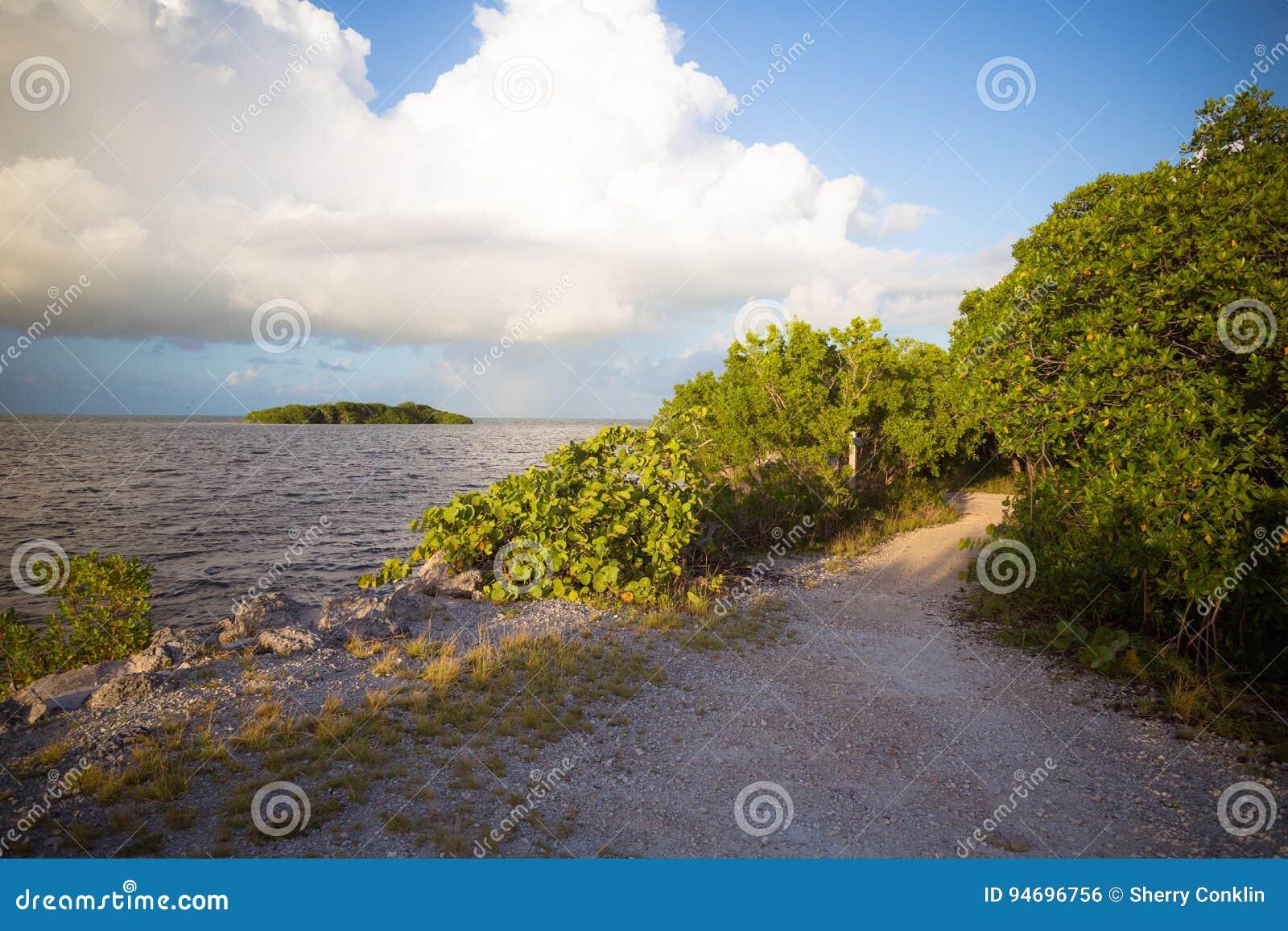 Взгляд пути мангровы в ключах Флориды
