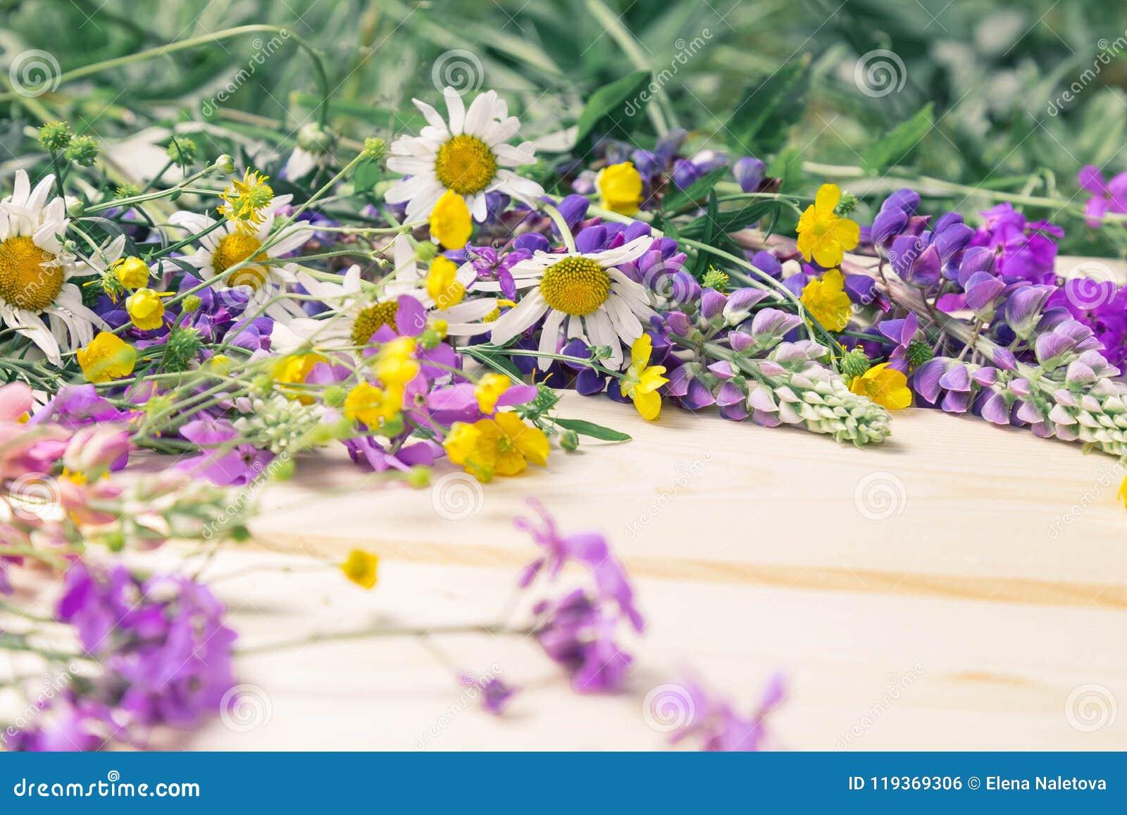 Взойдите на борт предпосылки для дизайна в рамке blossoming цветков лета Место для надписи