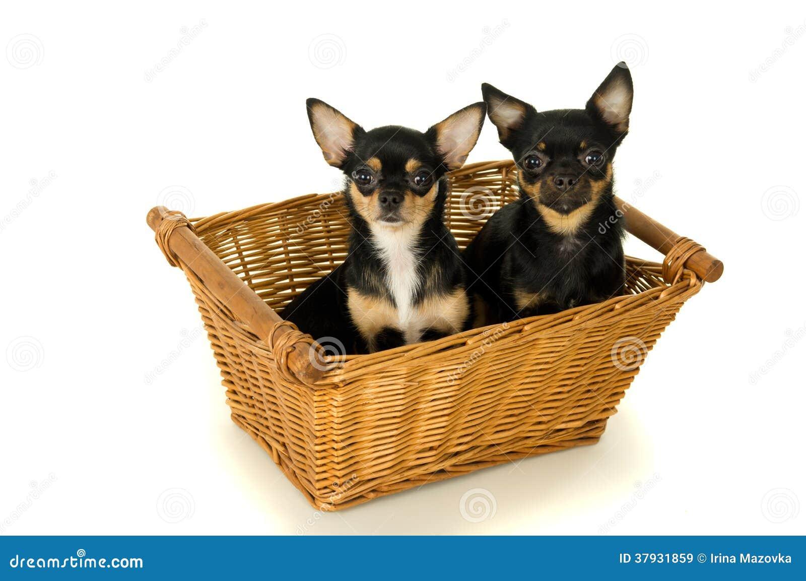 2 взрослого собак сидят в корзине