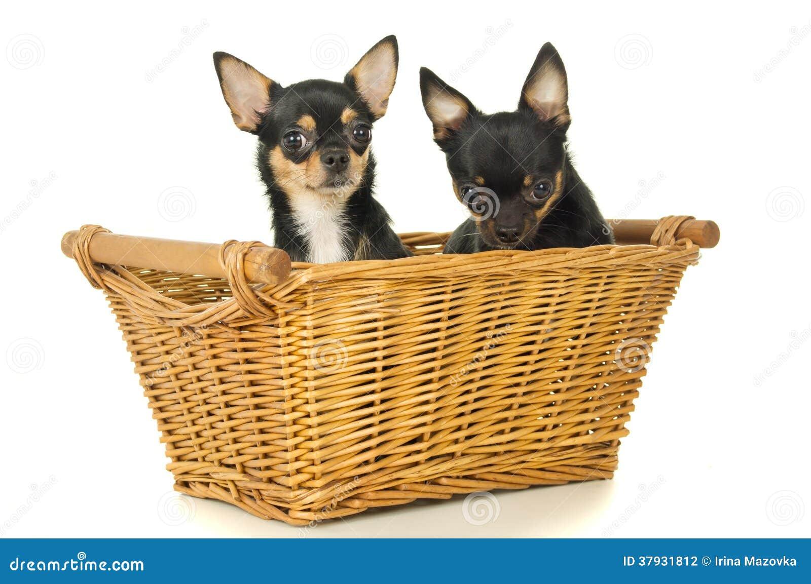 2 взрослого собак сидят