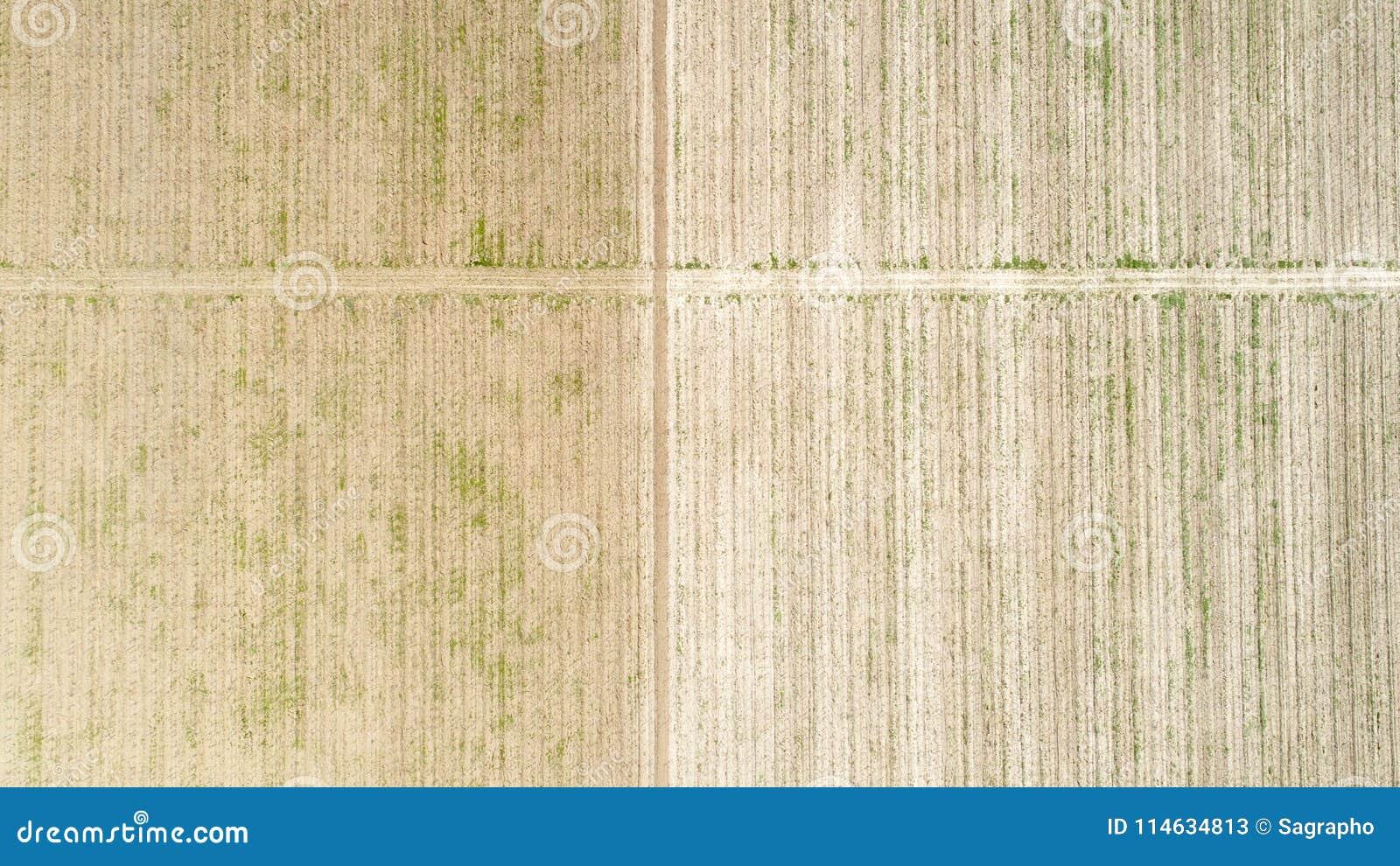Вид с воздуха над полем урожая, преждевременным