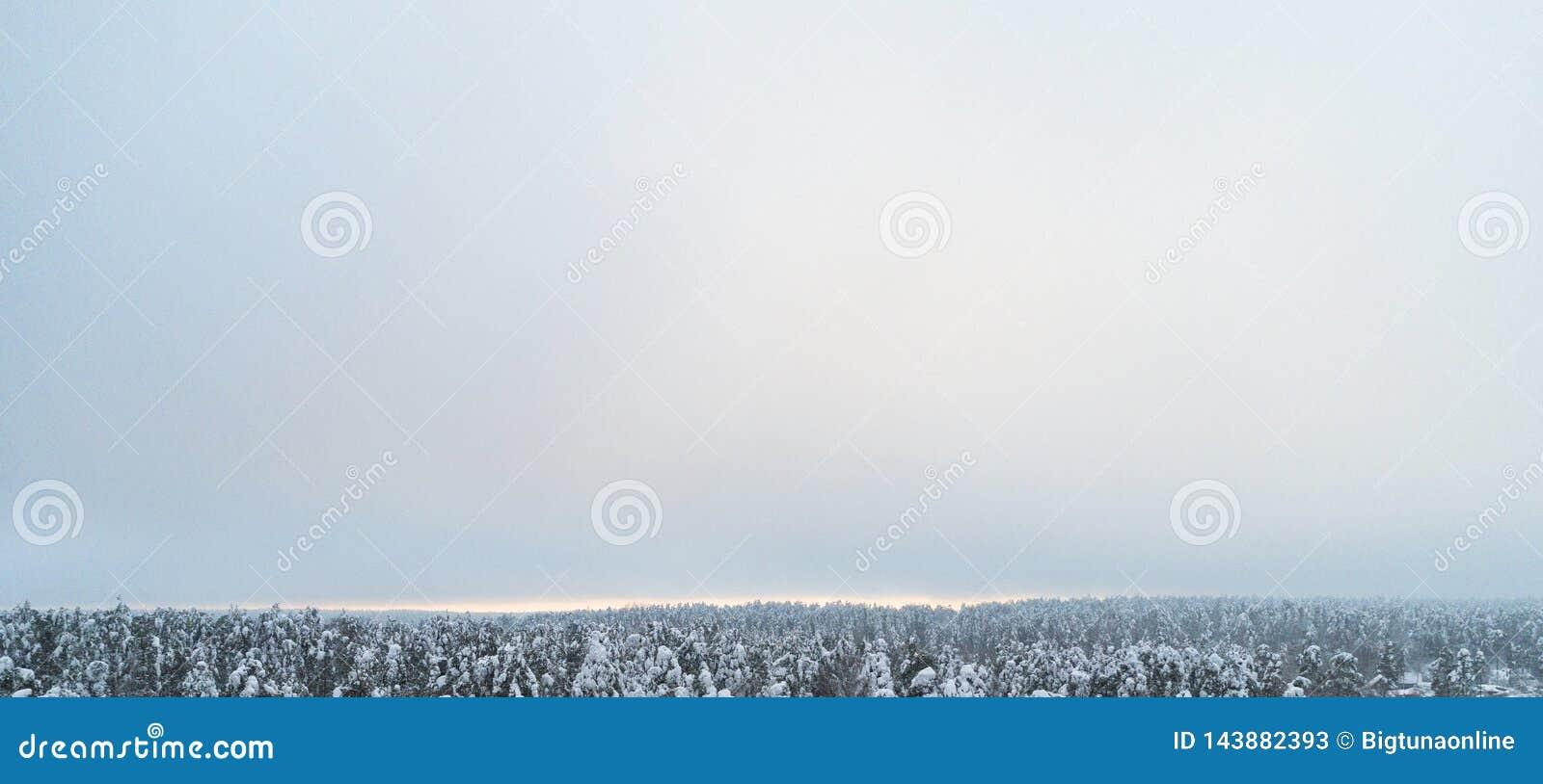 Вид с воздуха текстуры леса зимы соснового леса зимы покрытой снег вид с воздуха Воздушный взгляд трутня ландшафта зимы Sno