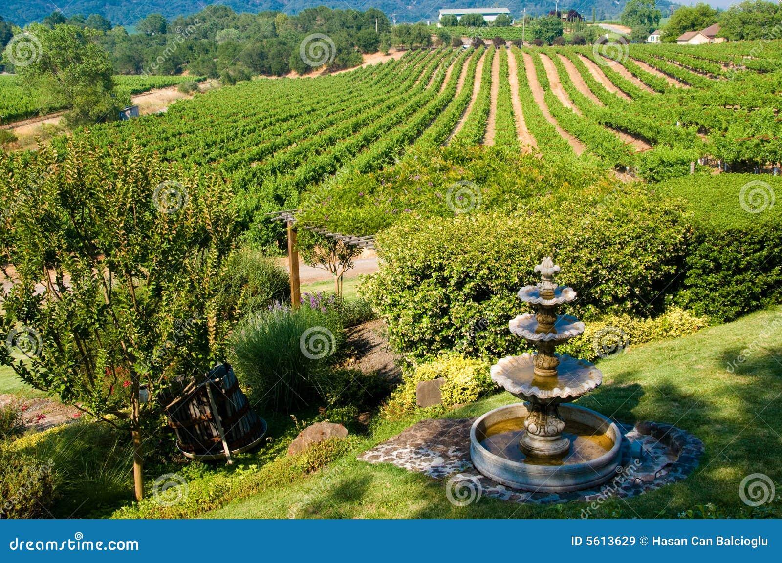 виноградники завальцовки california