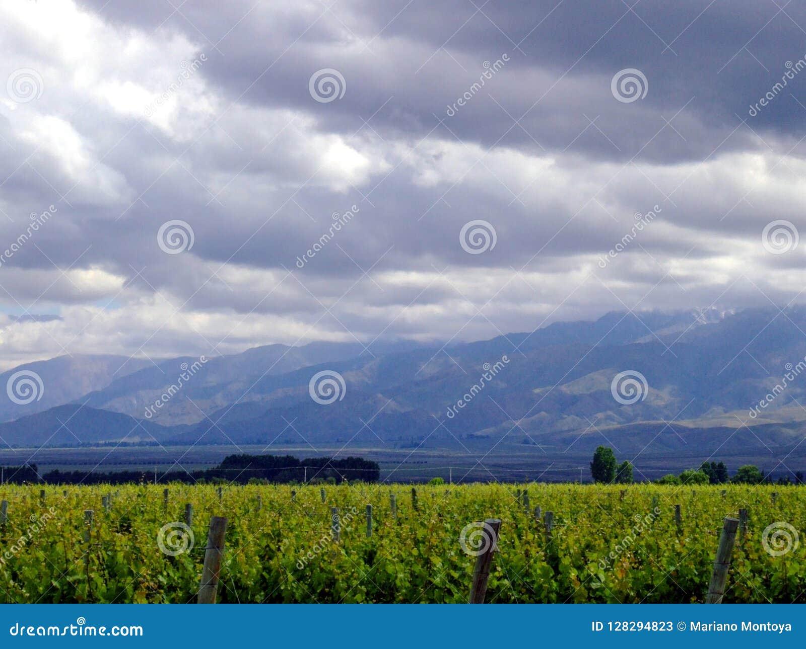 Виноградники и небо