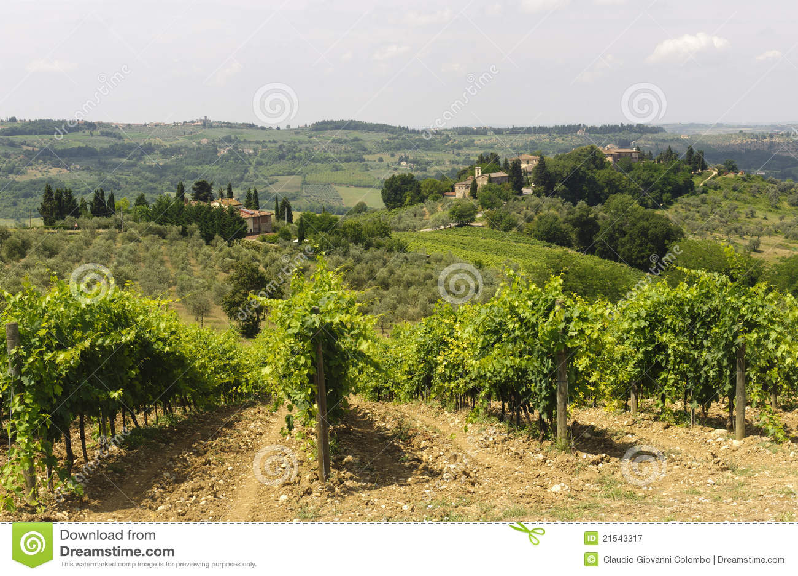 виноградники Тосканы chianti