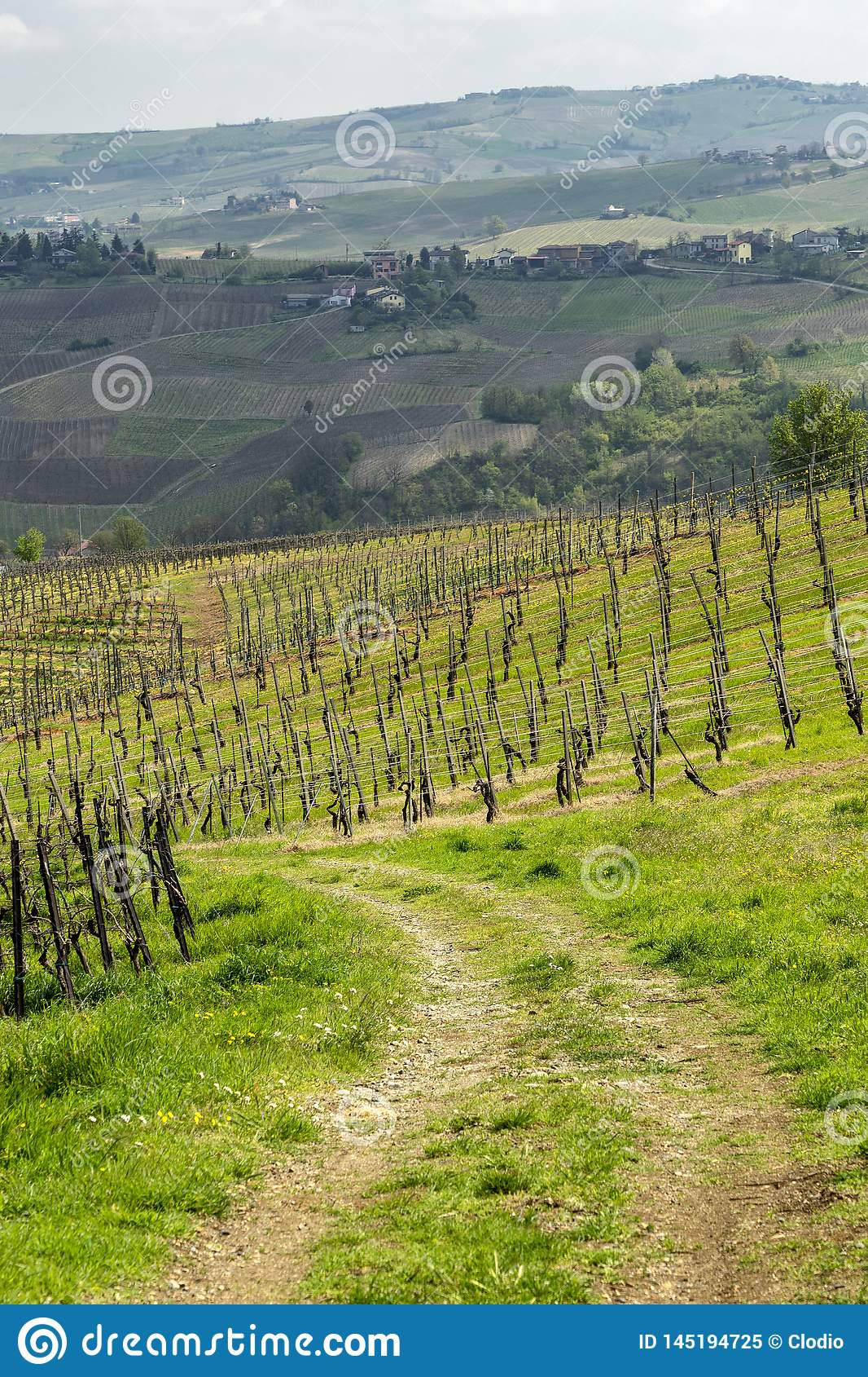 Виноградники Oltrepo Pavese в апреле