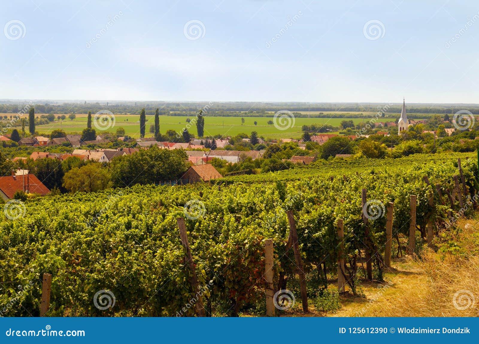 Виноградник Ландшафт Южной Европы с малой деревней, chur