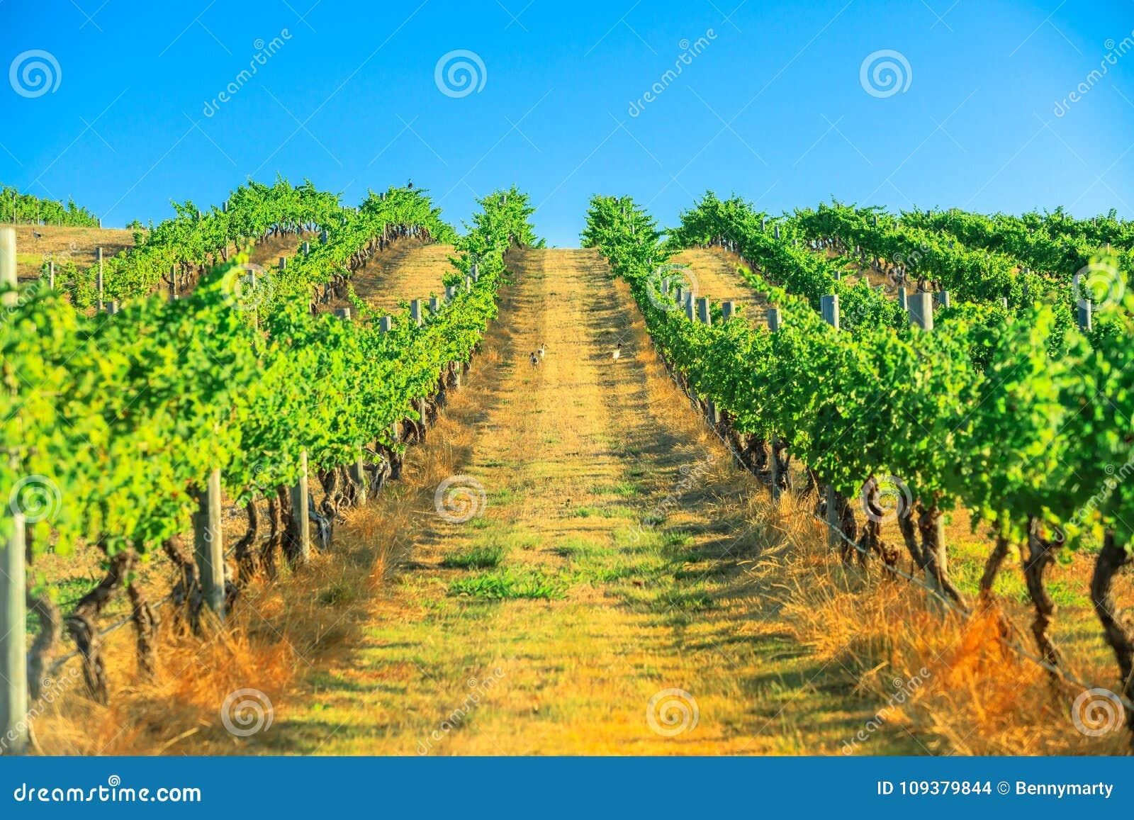 Виноградник реки Маргарета