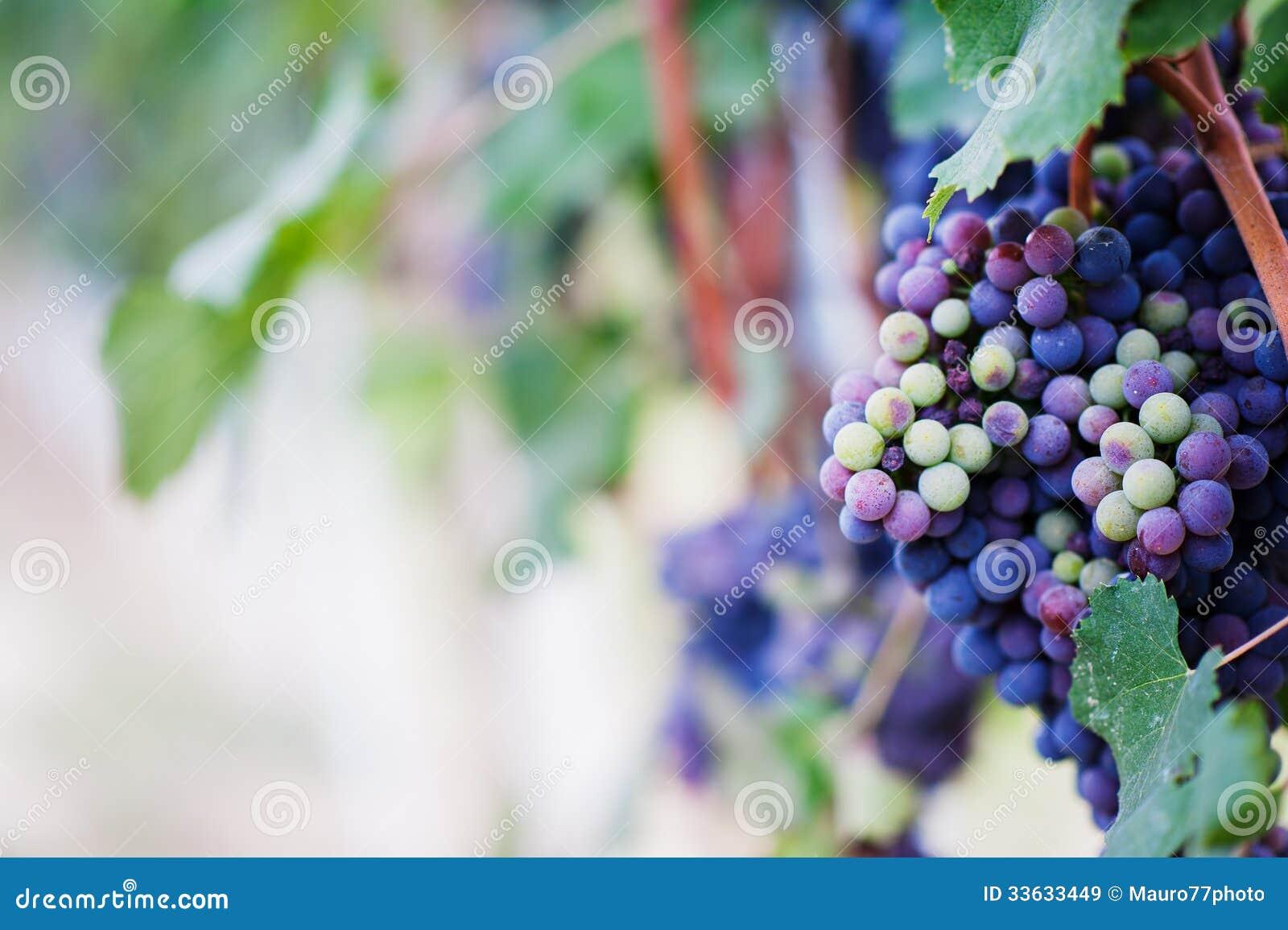 Виноградина красного вина